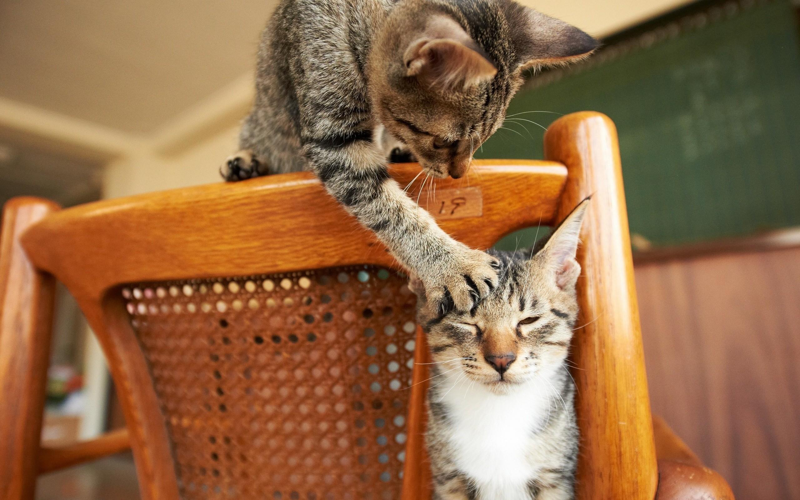 прикольные котята лободу