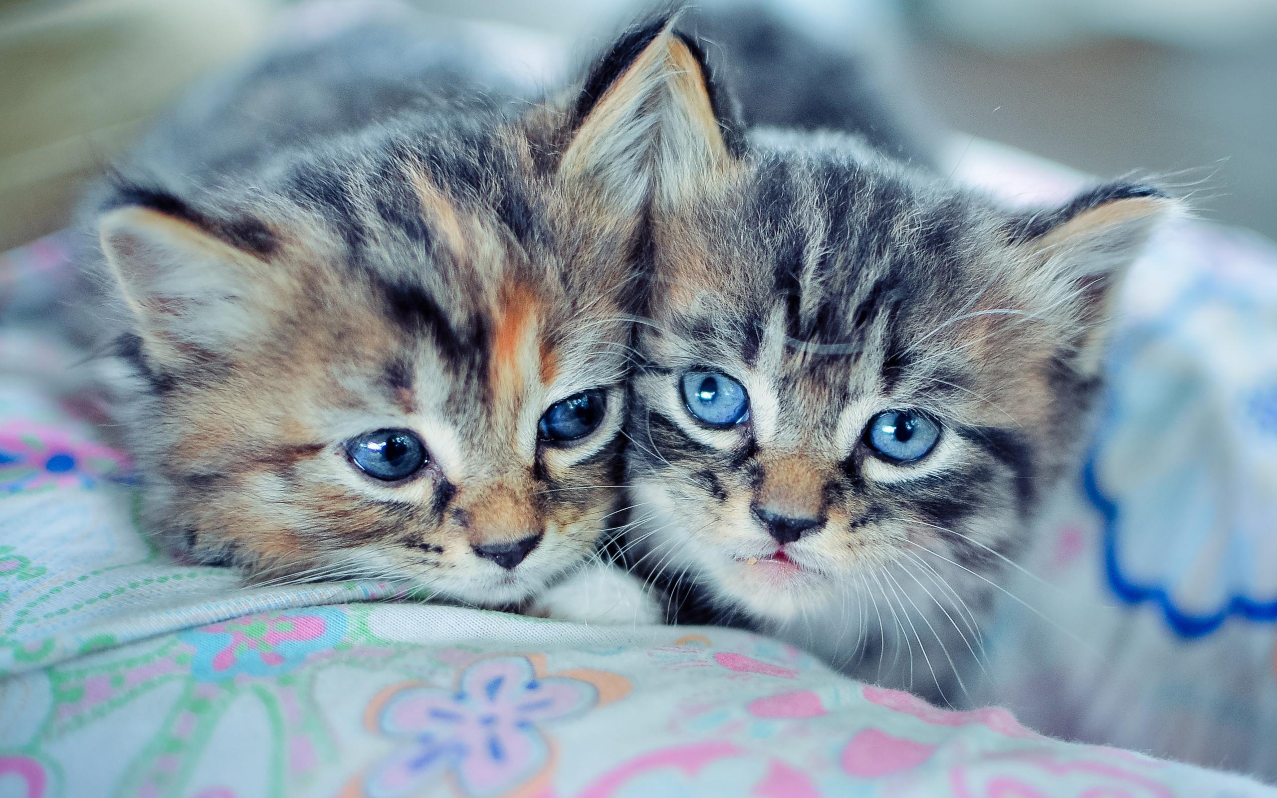 банан это смотреть фото красивых кошек и котят сказать, что