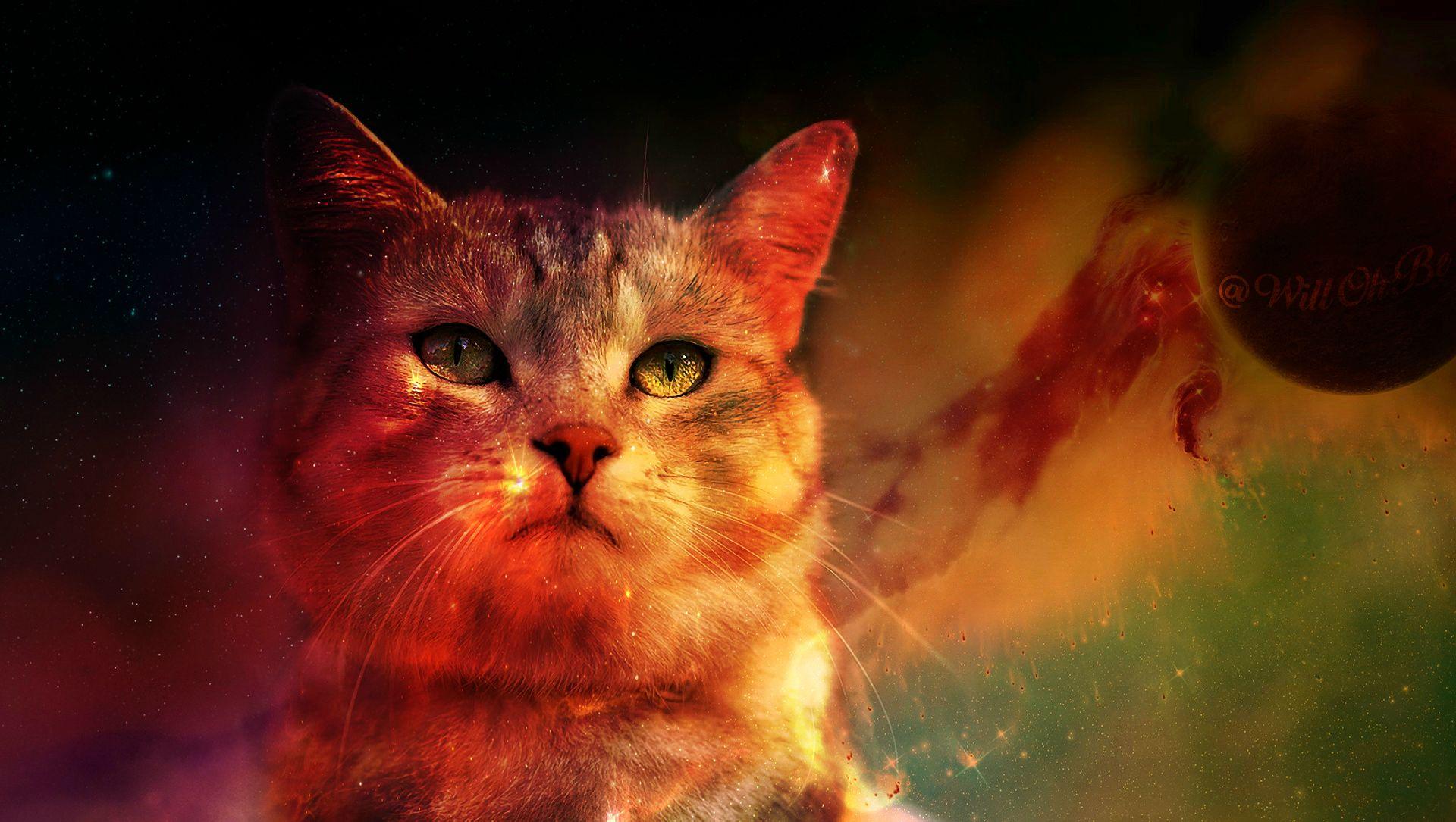 Cat Digital Art Space Planet Animals