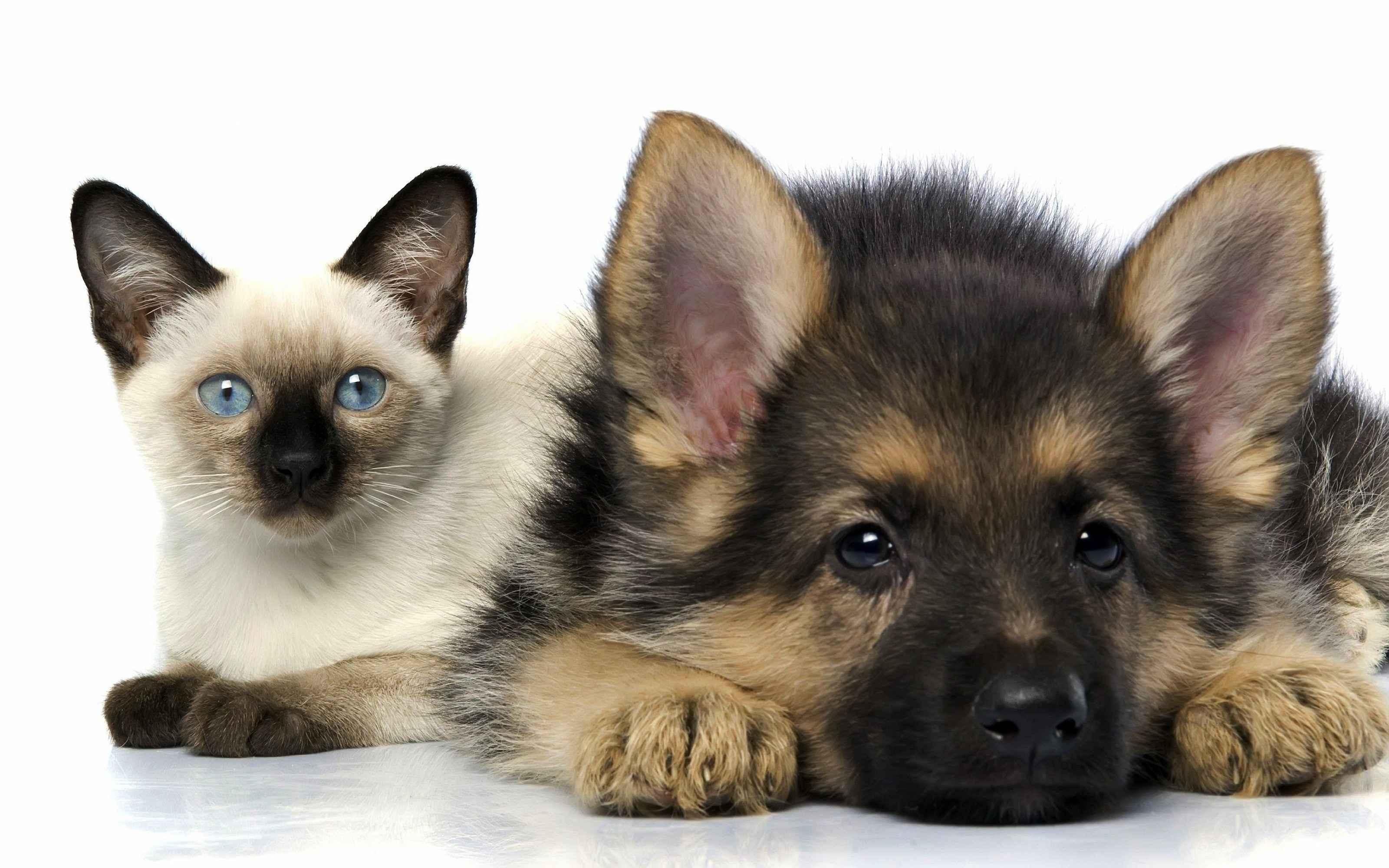 Обои кот, Собака, щенок. Собаки foto 11
