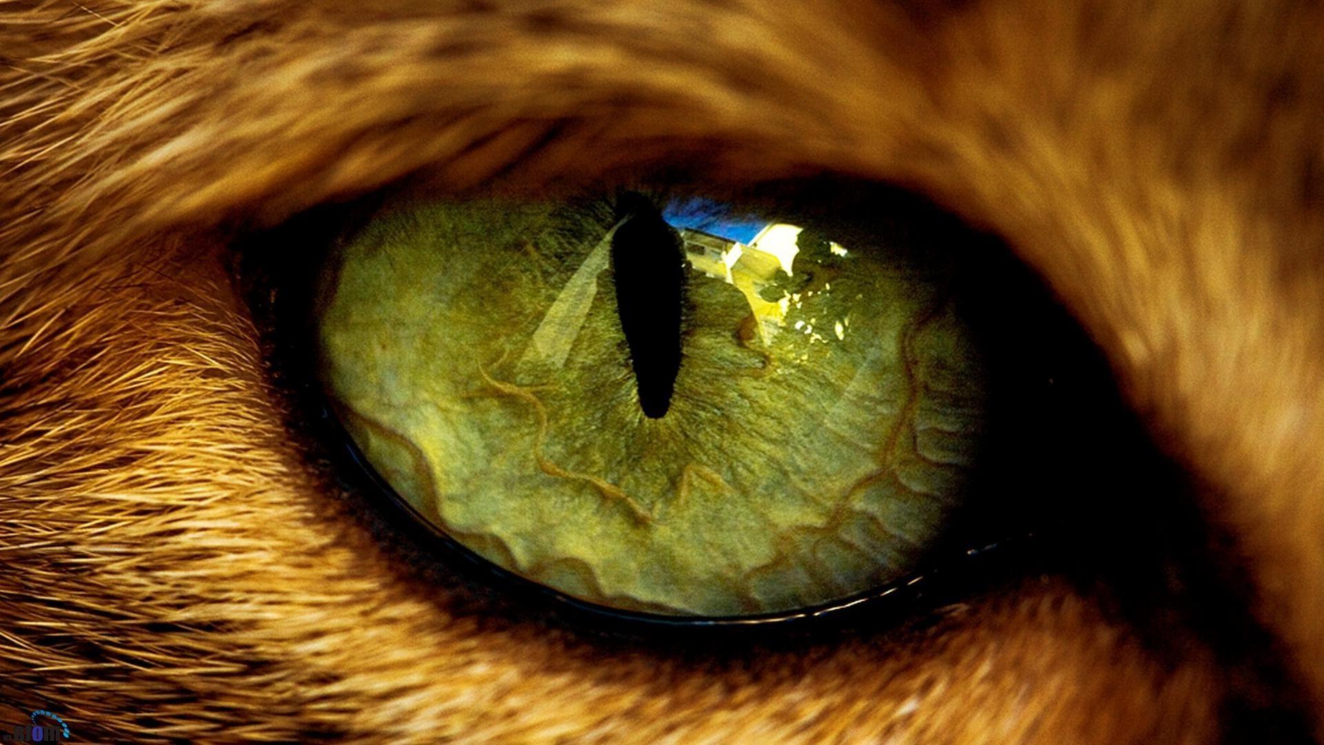 Как сделать глаза как у кошки фото