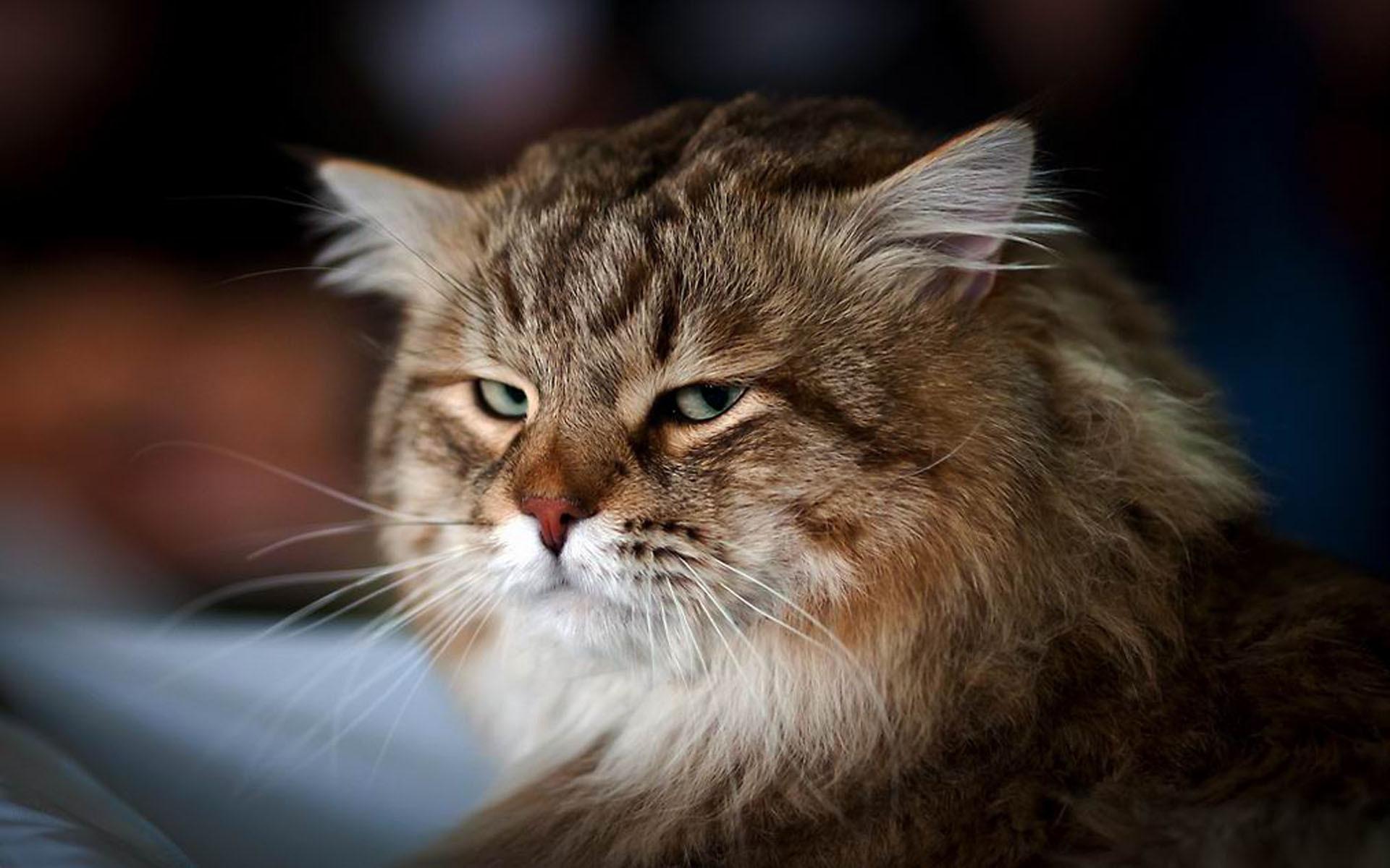 онлайн самые наглые животные на фото подиумы продемонстрировали