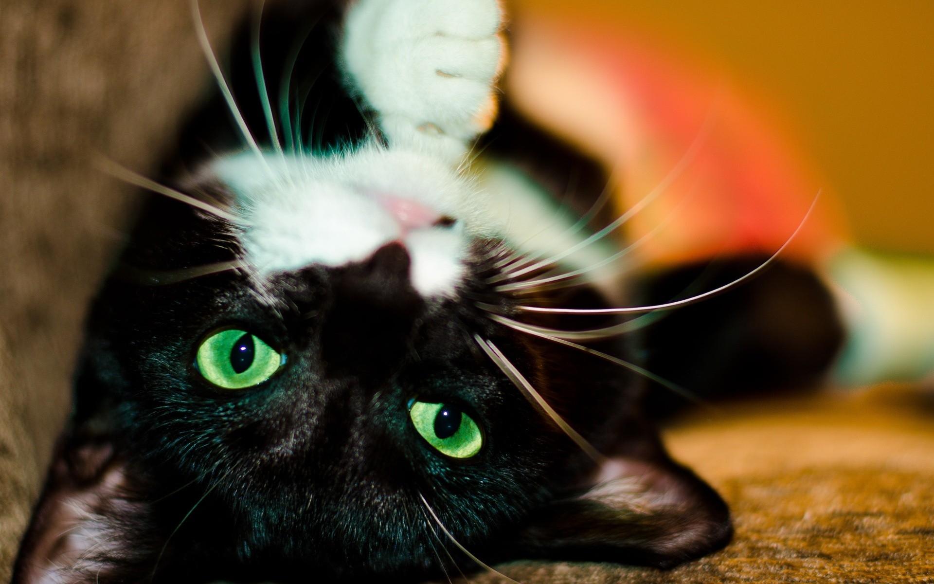 Картинки черной кошки с зелеными глазами красивые