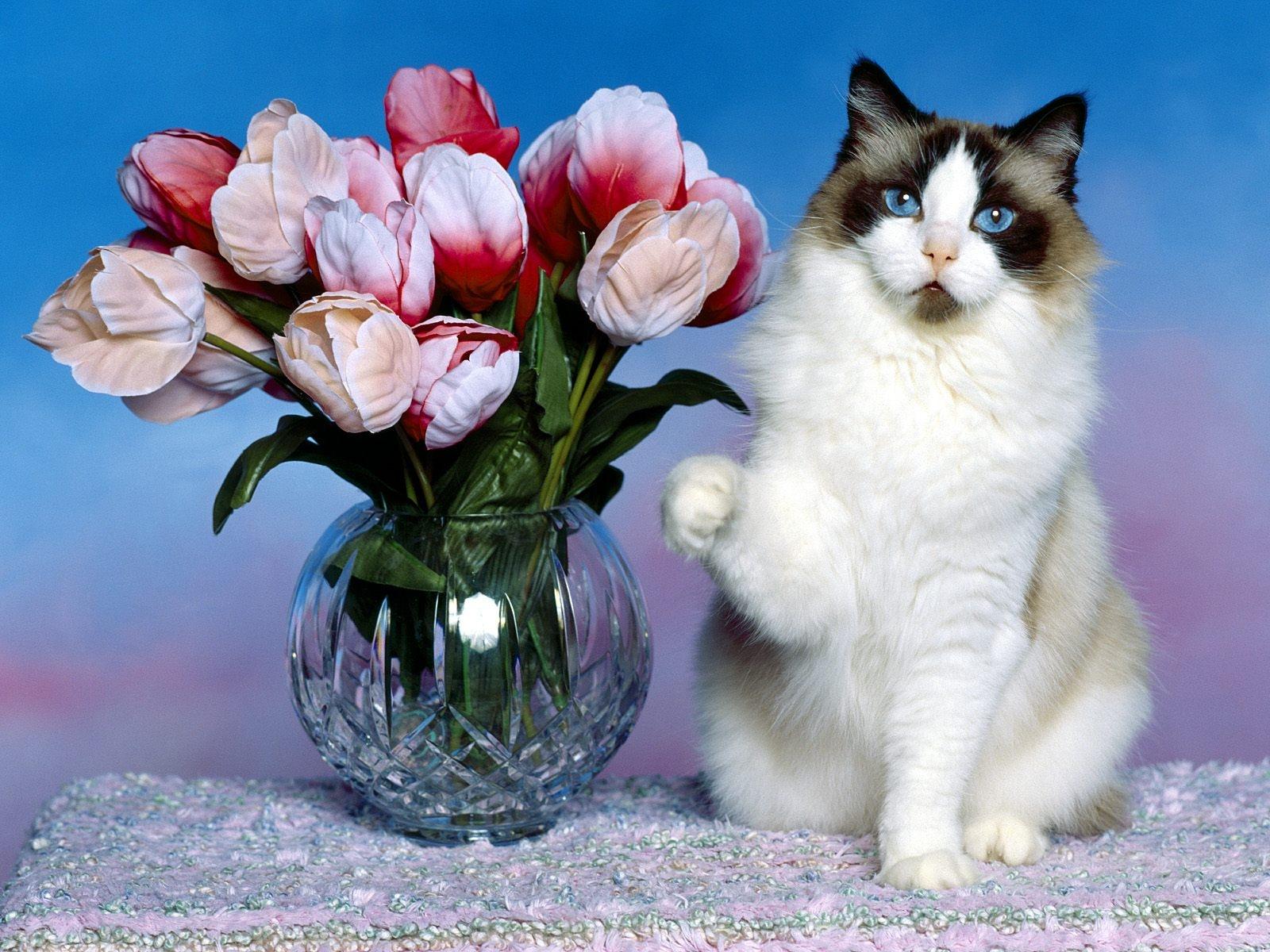 Обои на рабочий стол кошки с цветами