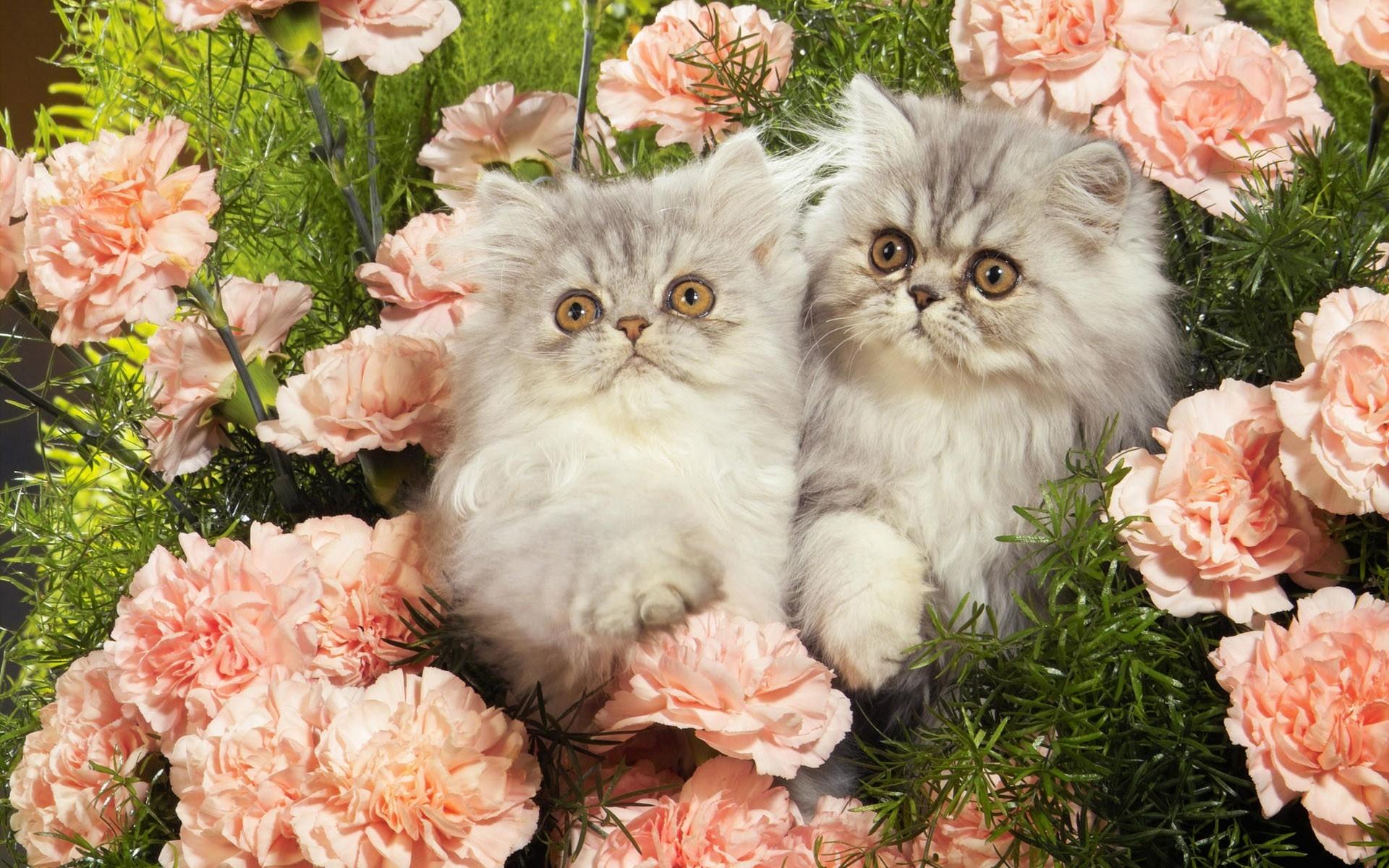 обид забывают фотообои коты с цветами заметили