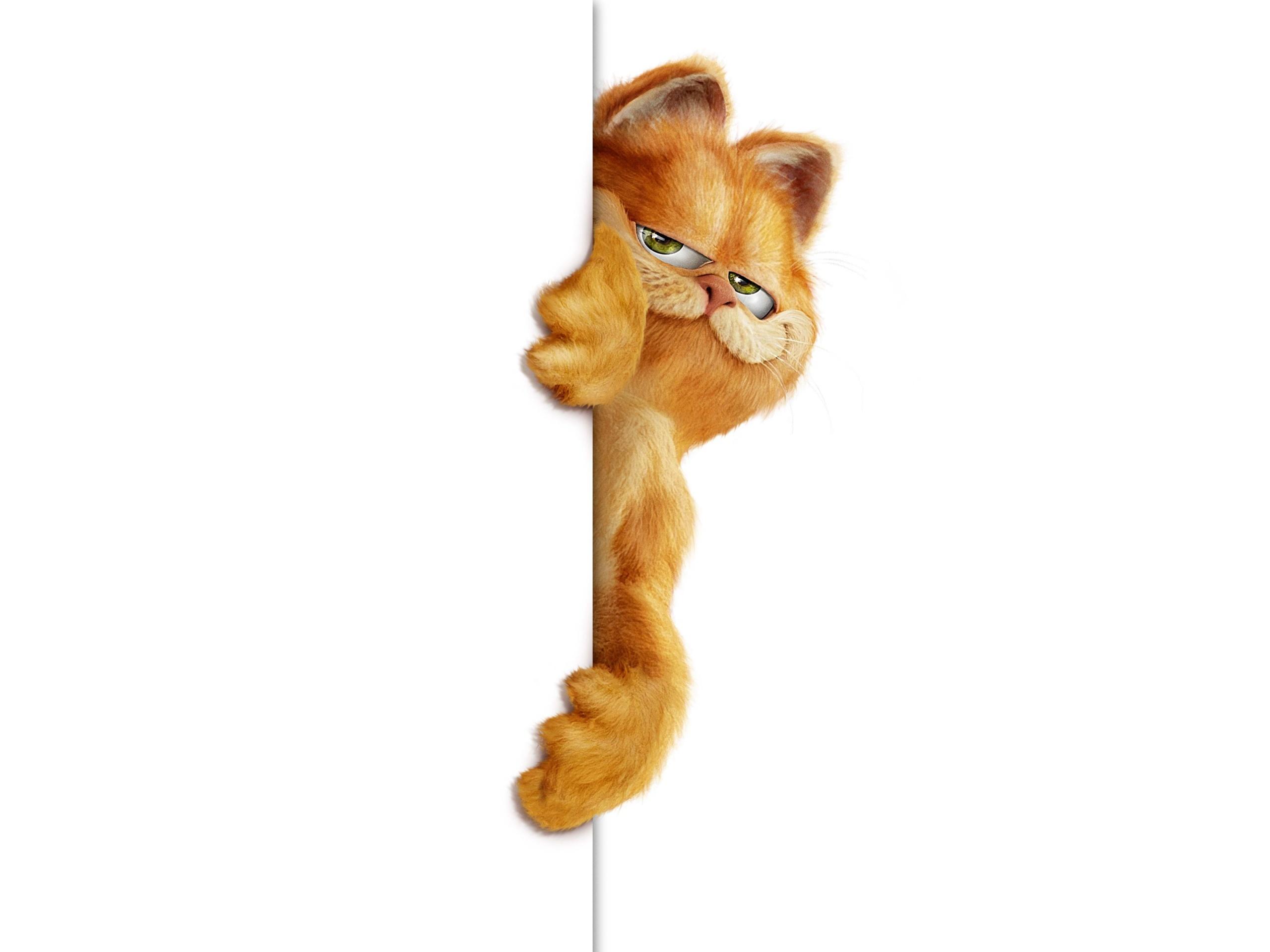 Unduh 61+  Gambar Kucing Garfield Asli Paling Imut Gratis