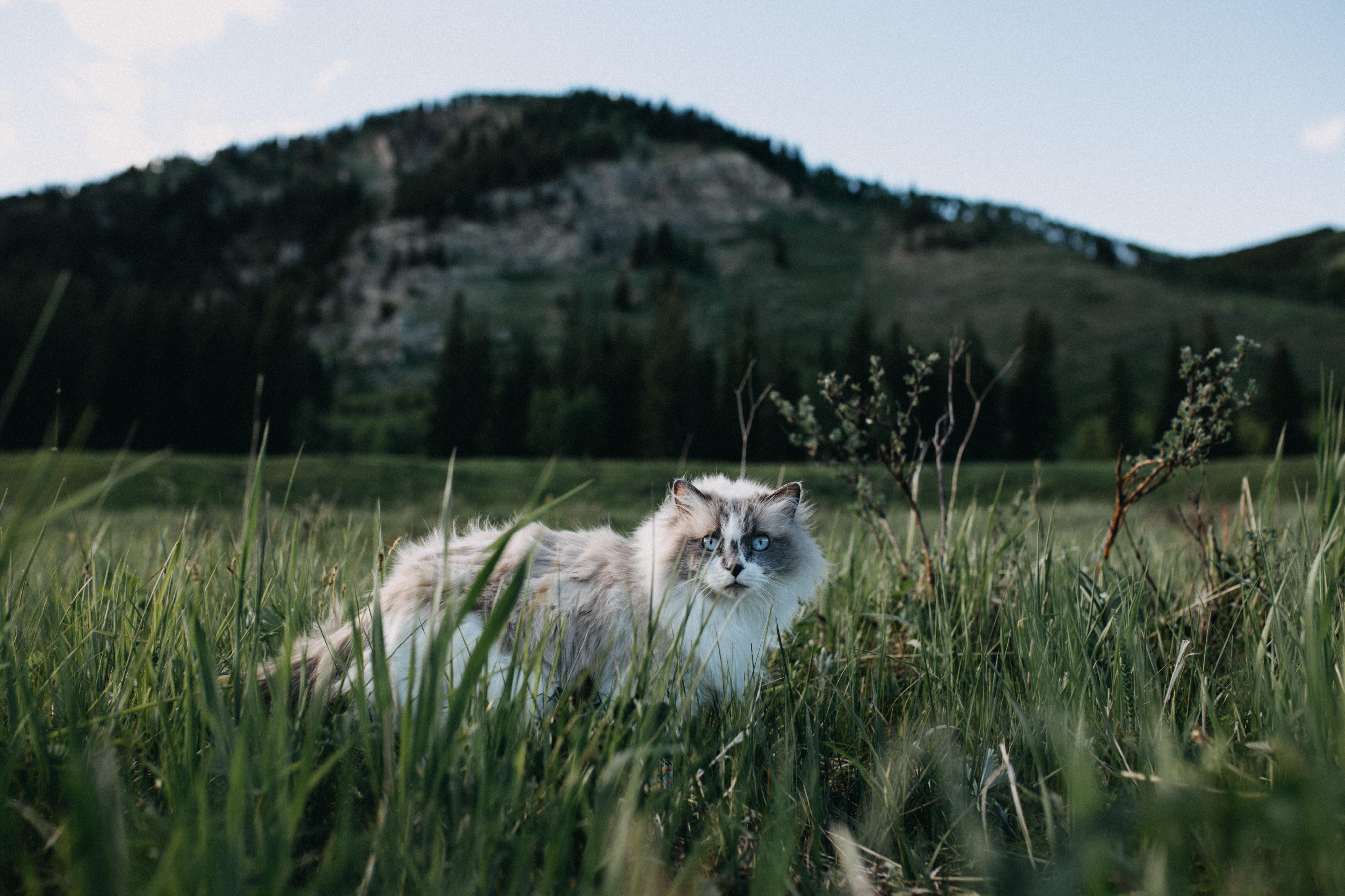 картинки с котами в горах это страна