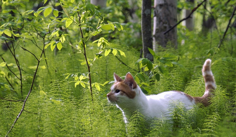 Fond d 39 cran jardin herbe vert faune chatons moustaches jungle printemps arbre - Herbe a chat plante ...