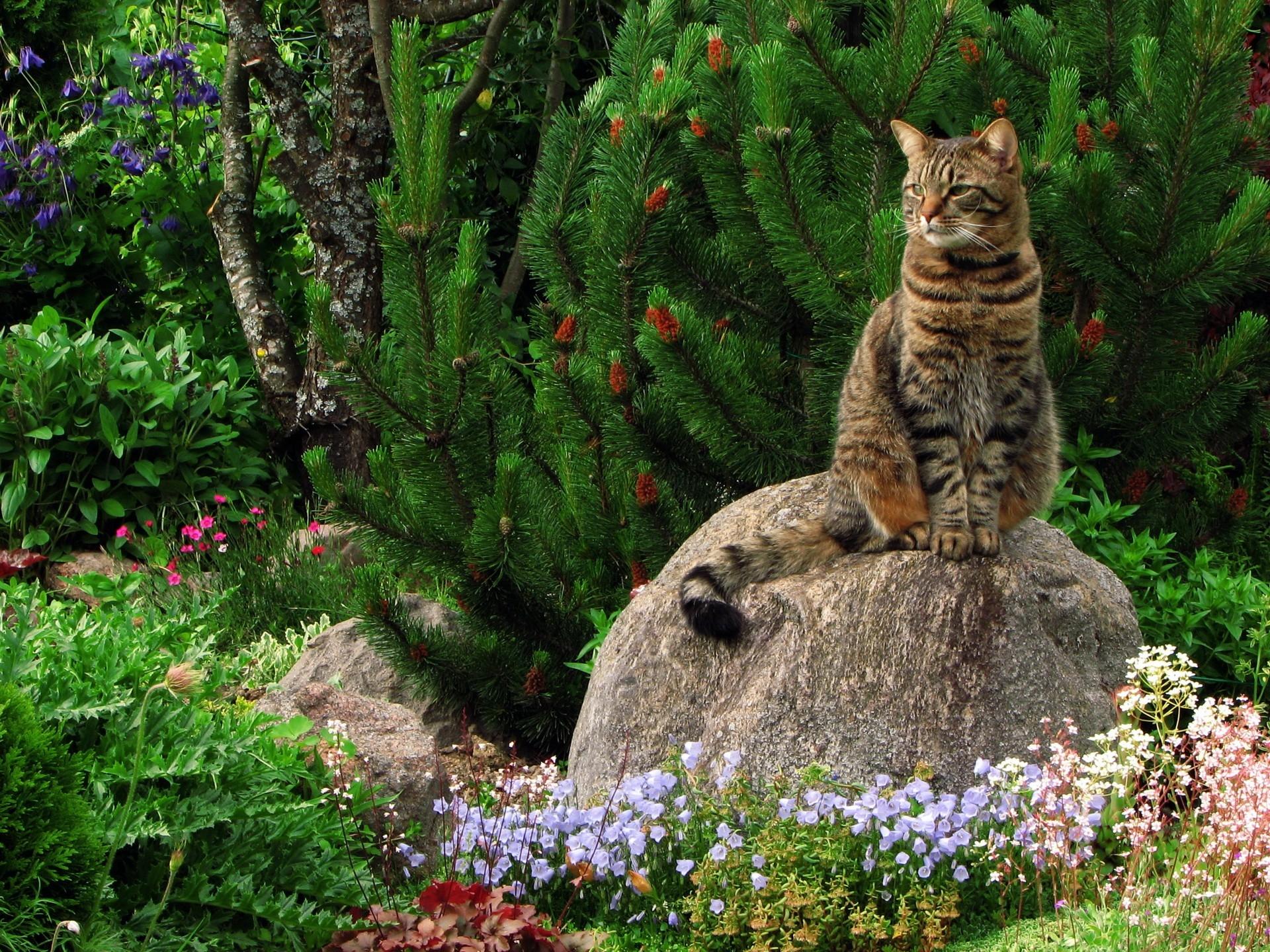 =^_^= Котики =^_^= - Страница 8 Cat-grass-flowers-garden-rock-sitting-landscape-669616
