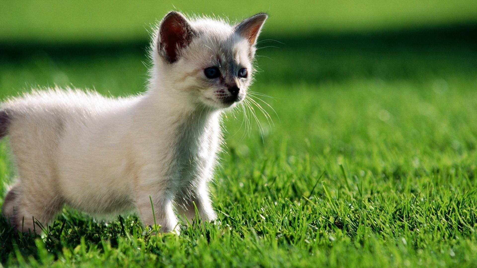 Котенок маленькая картинка