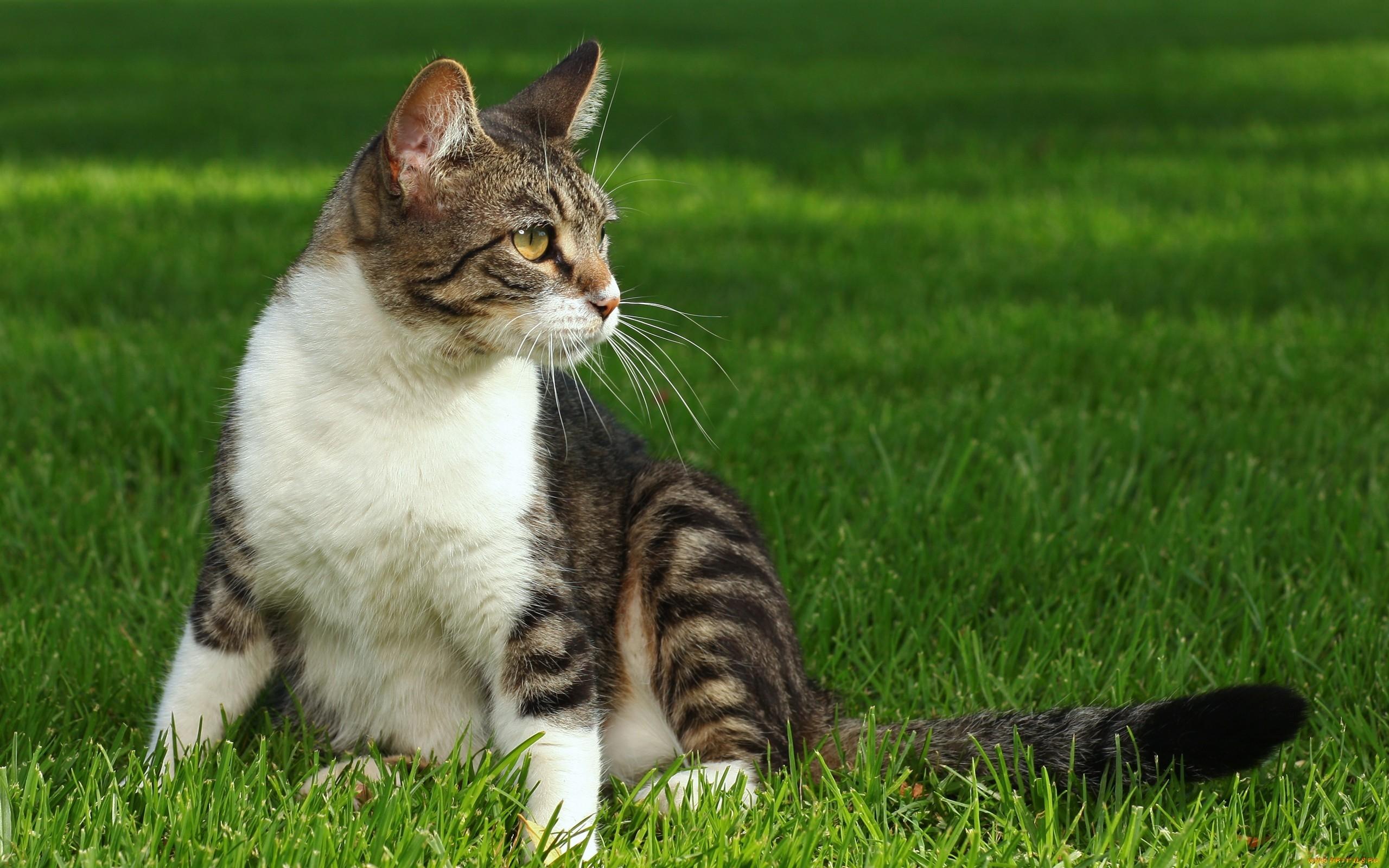 первом фото домашних котов на природе человеку под силу
