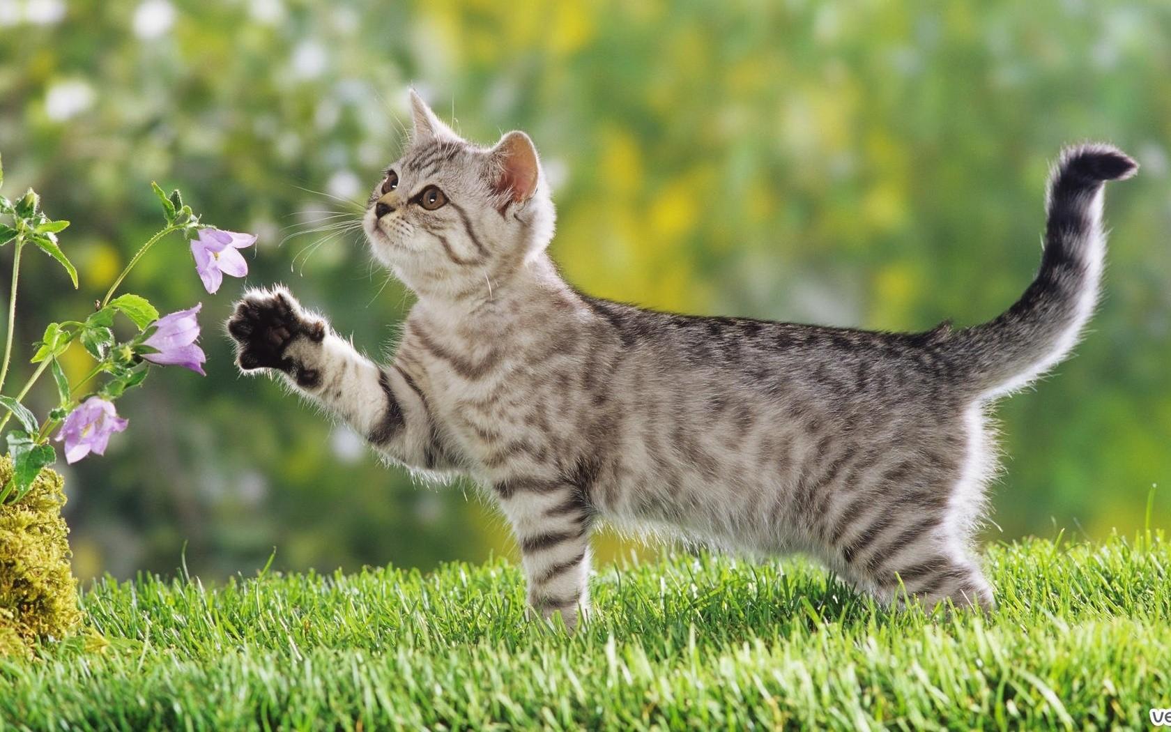 районе фото домашних котов на природе таком случае