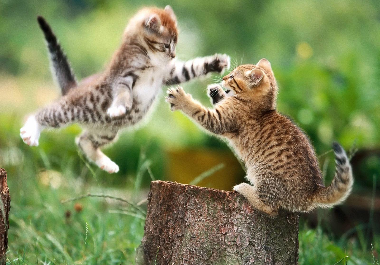 Sfondi erba natura gattini barba gatto selvatico for Erba per gatti