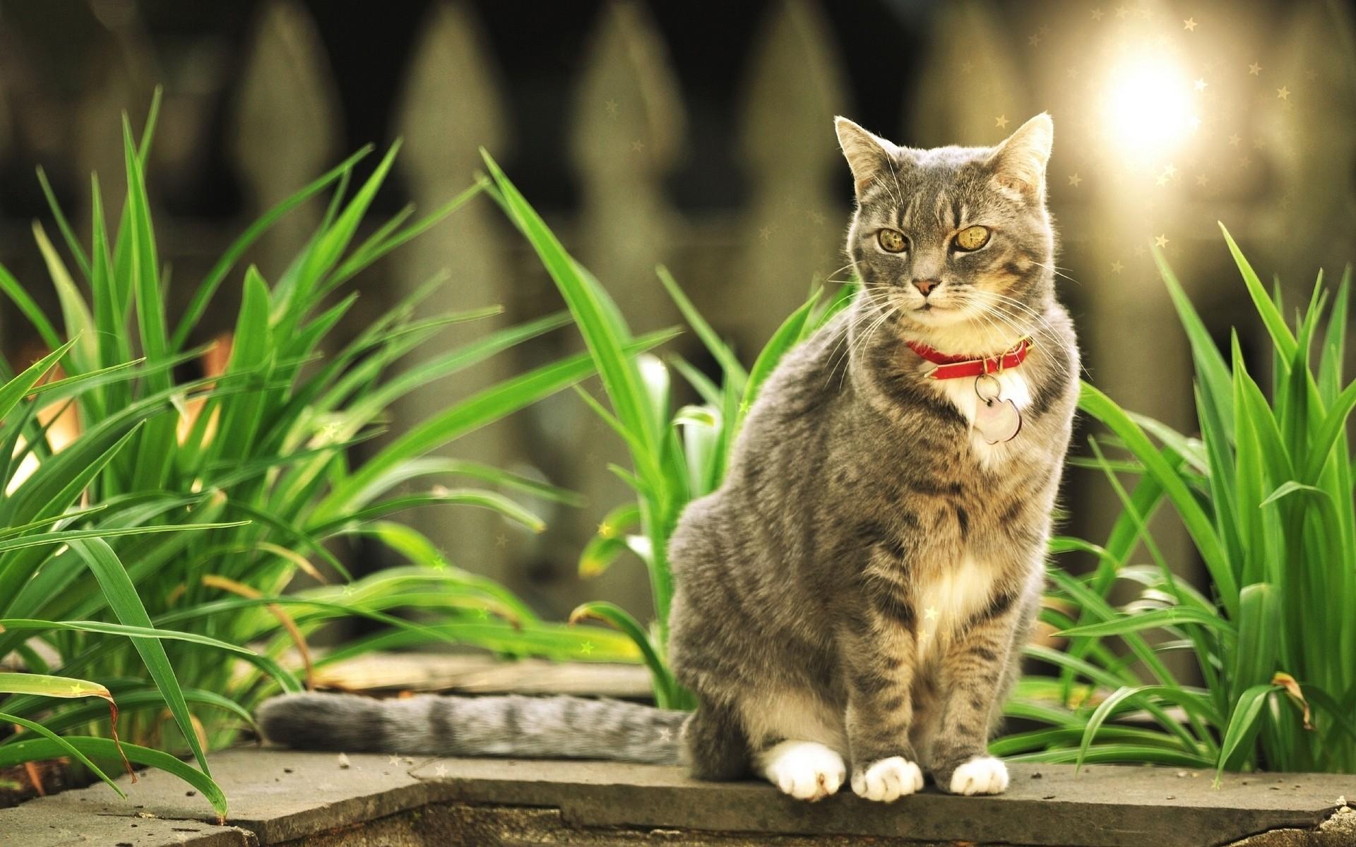 фото домашних котов на природе человека