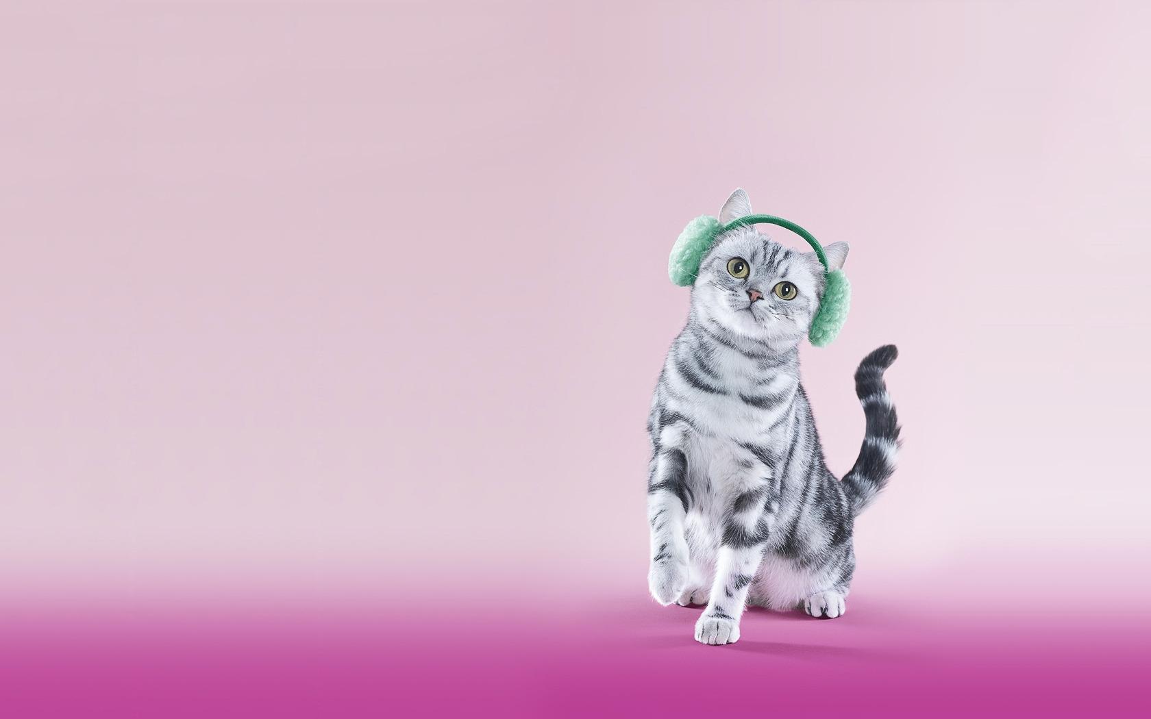 cat headphones lilac funny 1107067