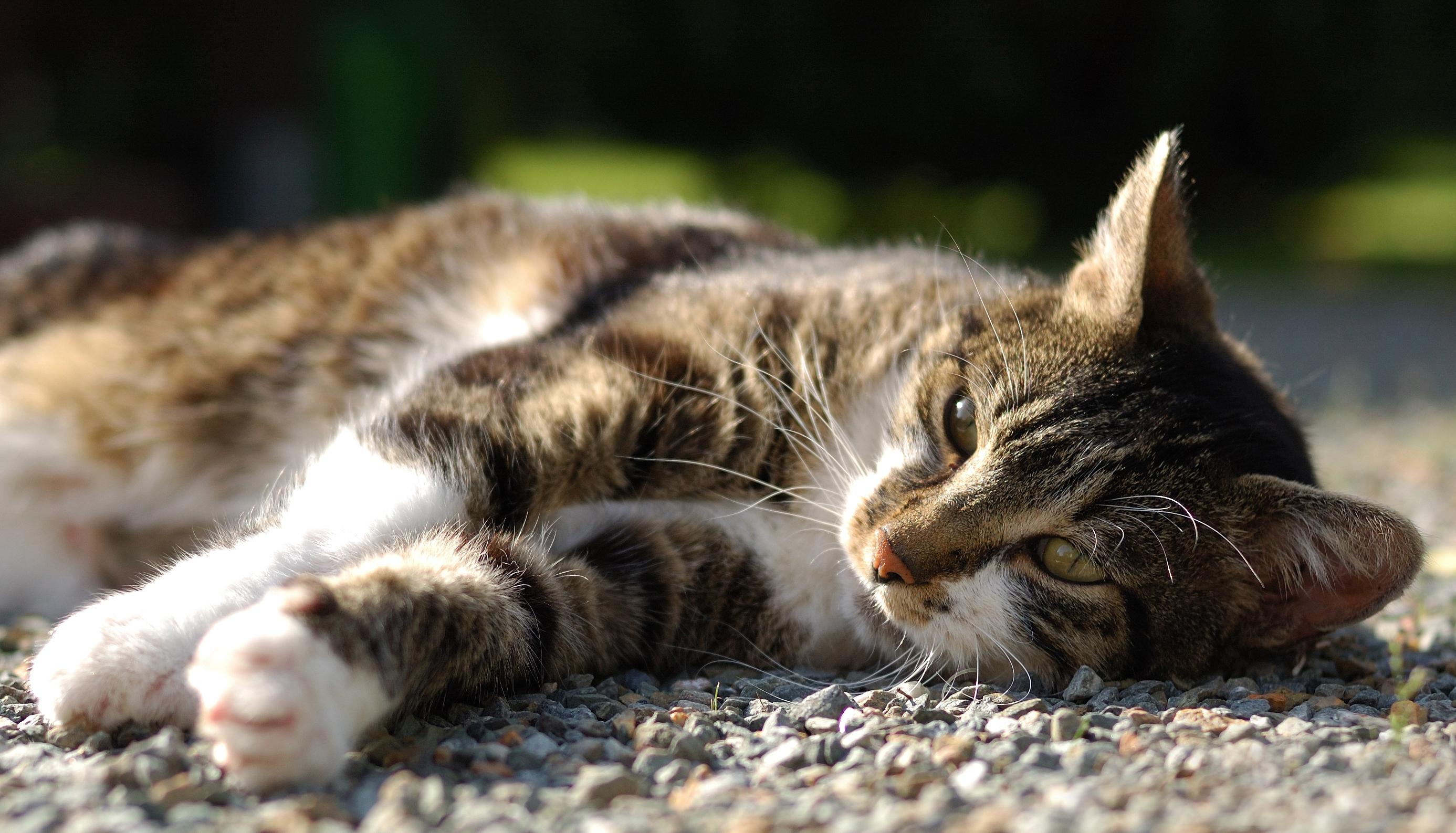 валяющиеся коты картинки время щупе