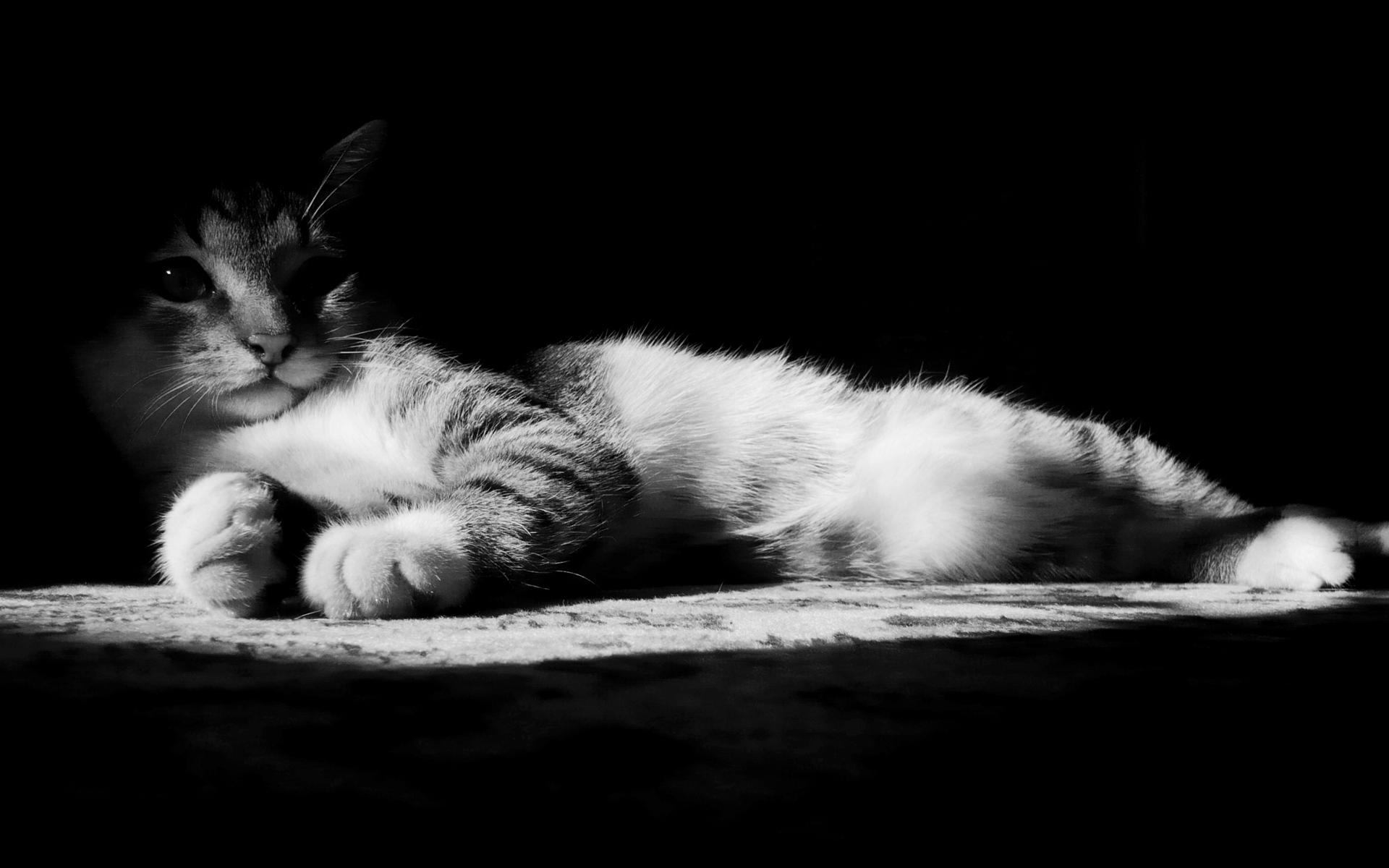 0af8251016e7d gato deitado sombra listrado Preto e branco