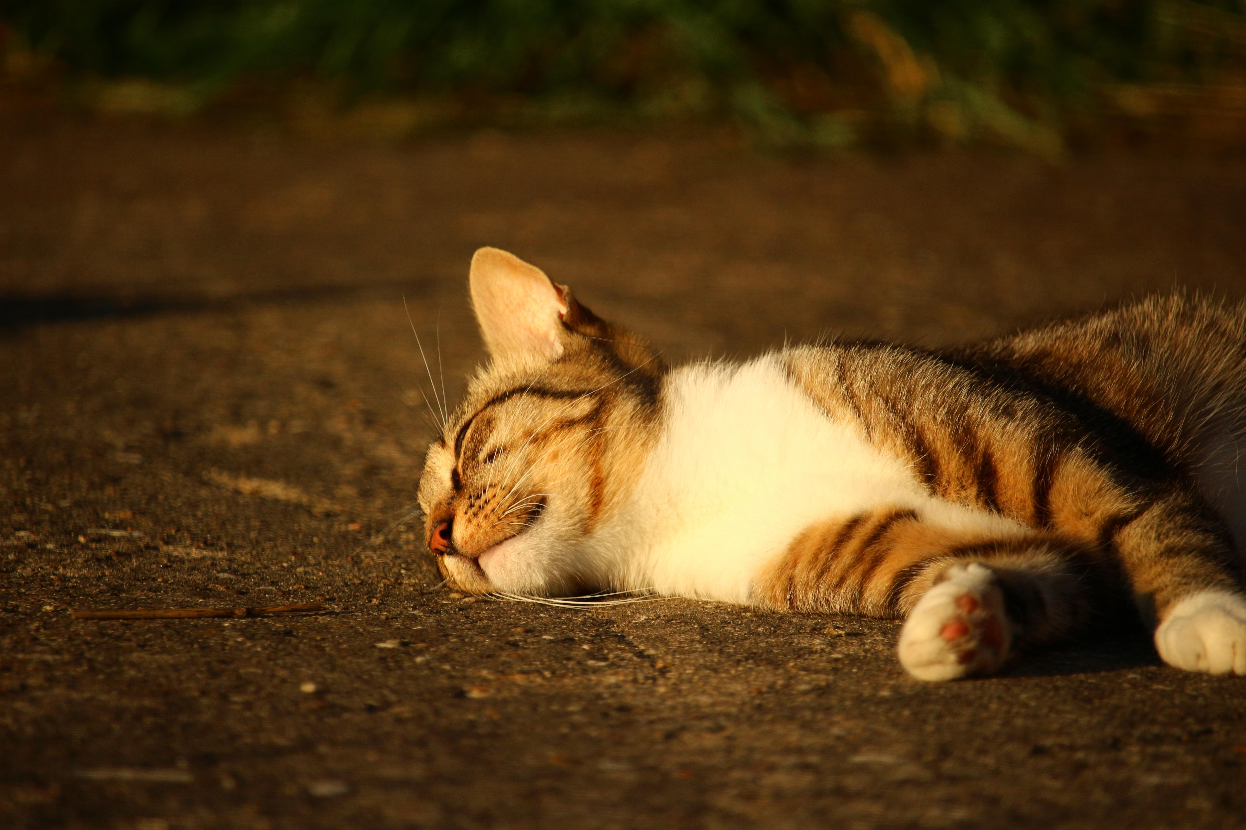 Котенок лежит в картинках