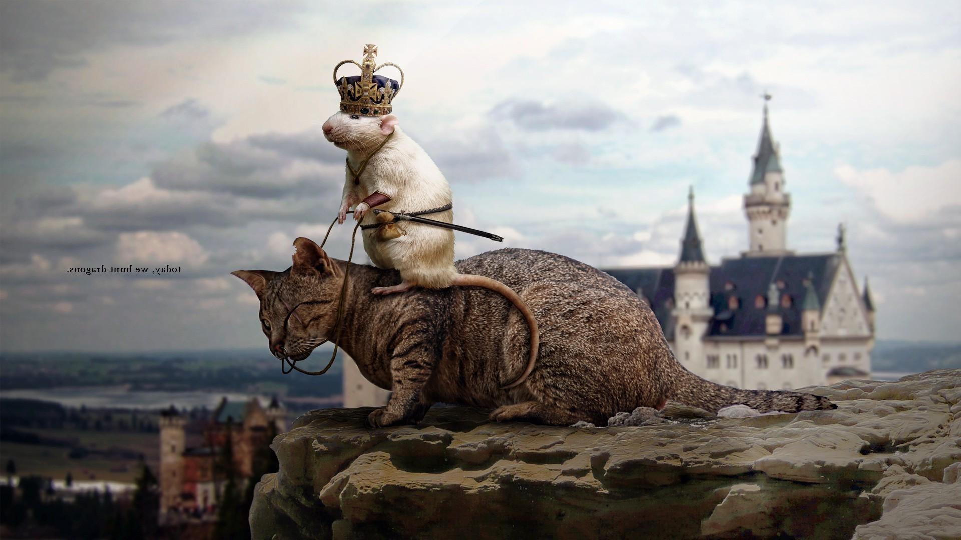 картинка кот с мышкой на голове самом