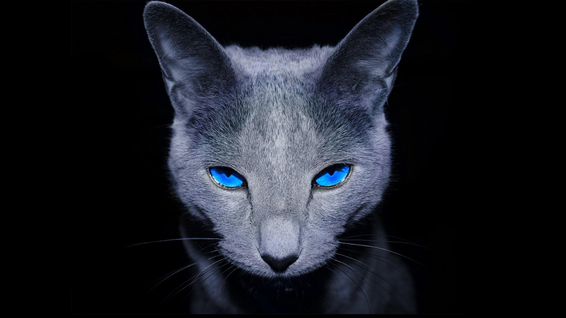 f1b4bab7a5cf φόντο   Γάτα