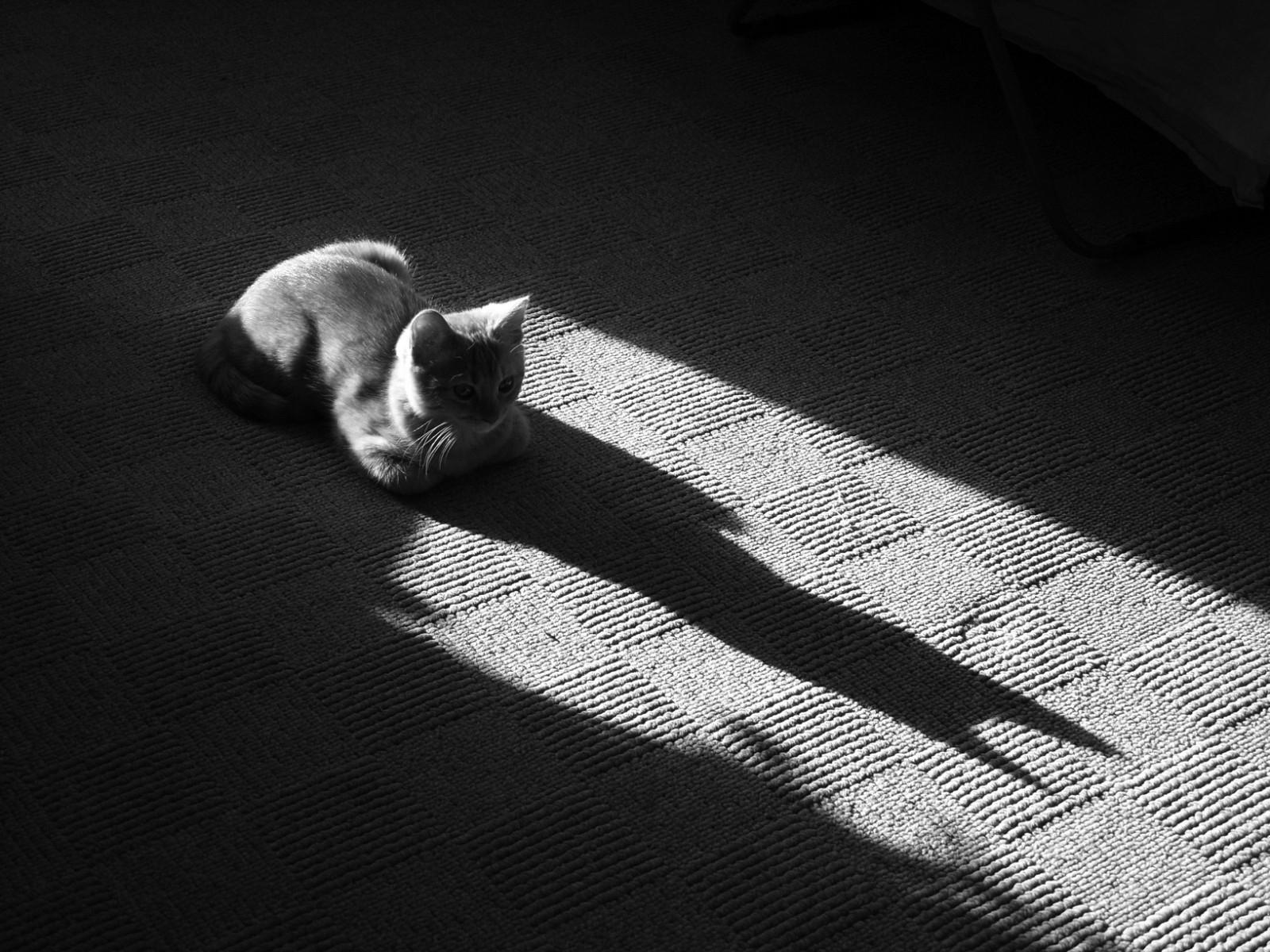08f7b3b07f6e5 gato focinho sombra chão deitado Preto e branco