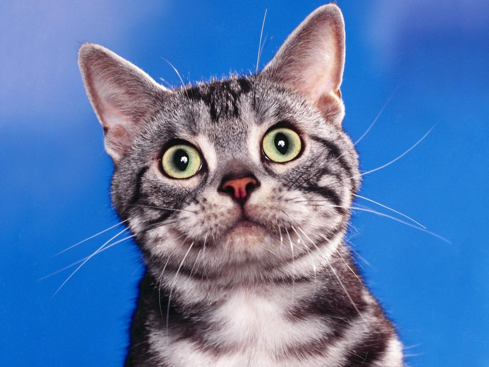 Картинки удивленных кошек