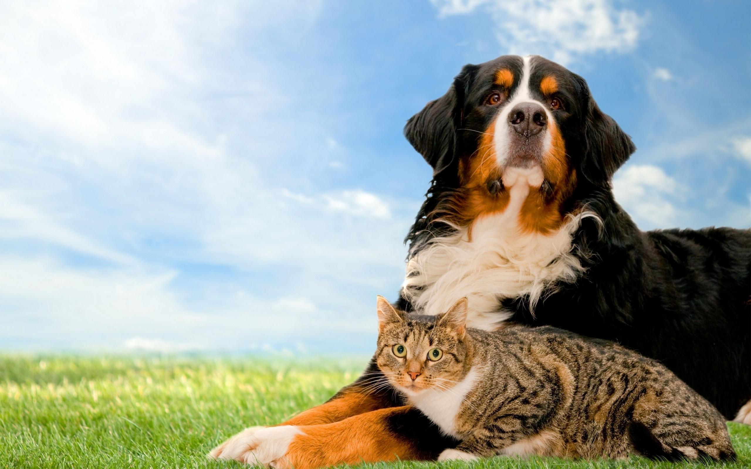 они фоновые картинки с собаками сценка про