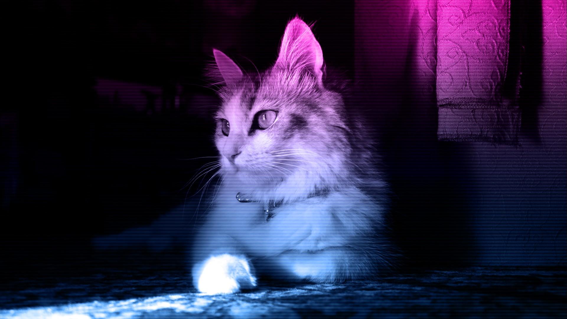 Tapety Kot Neon Wąsy Ciemność Kot Jak Ssak Małych I średnich
