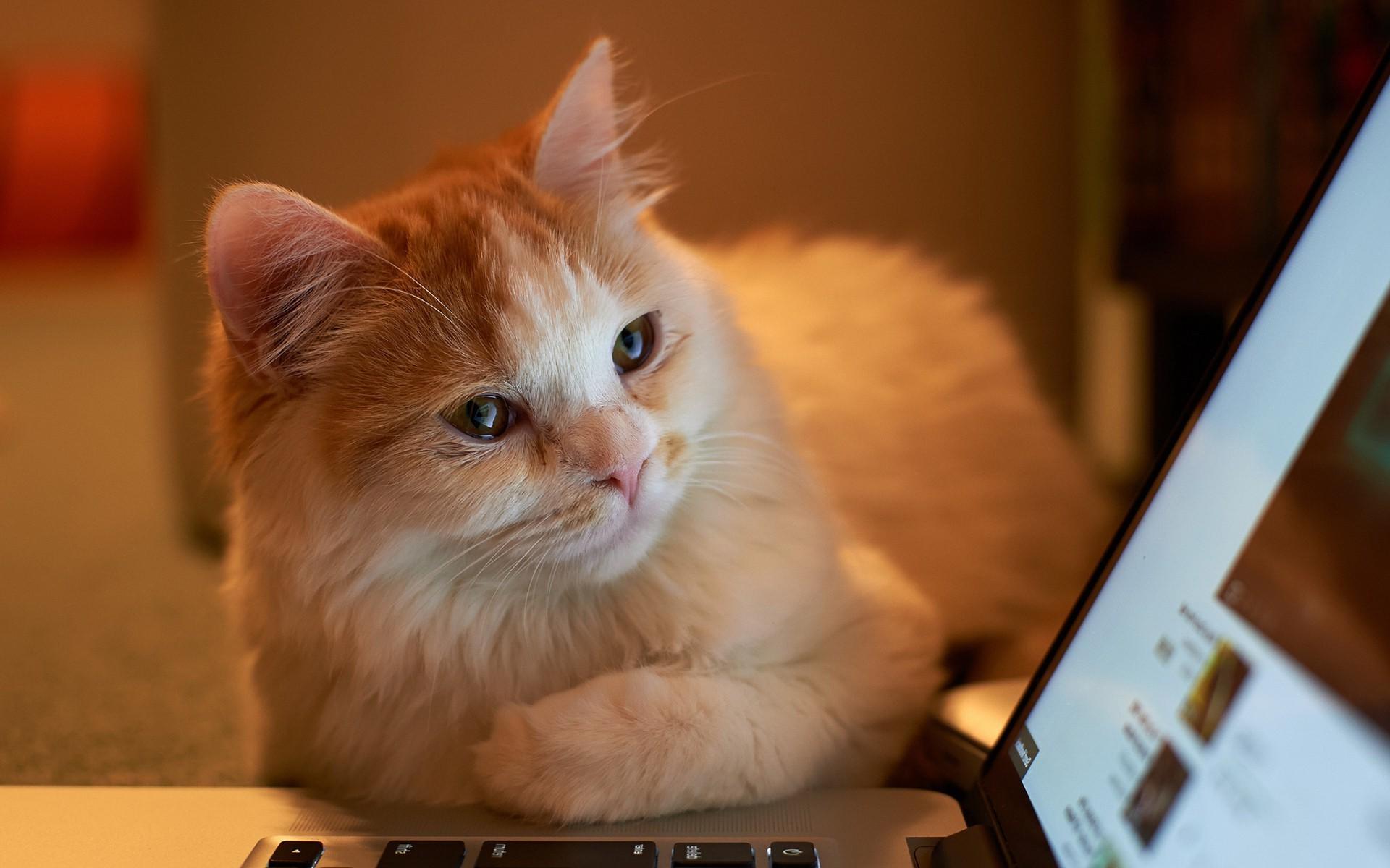 ноутбук скачать на бесплатные картинки