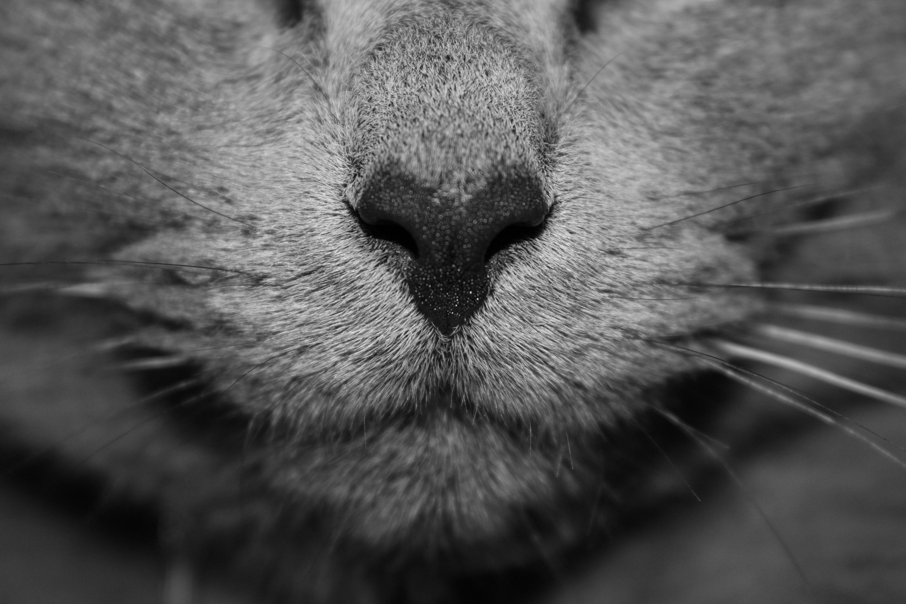 картинки усики котика шлягеров прикольных быть