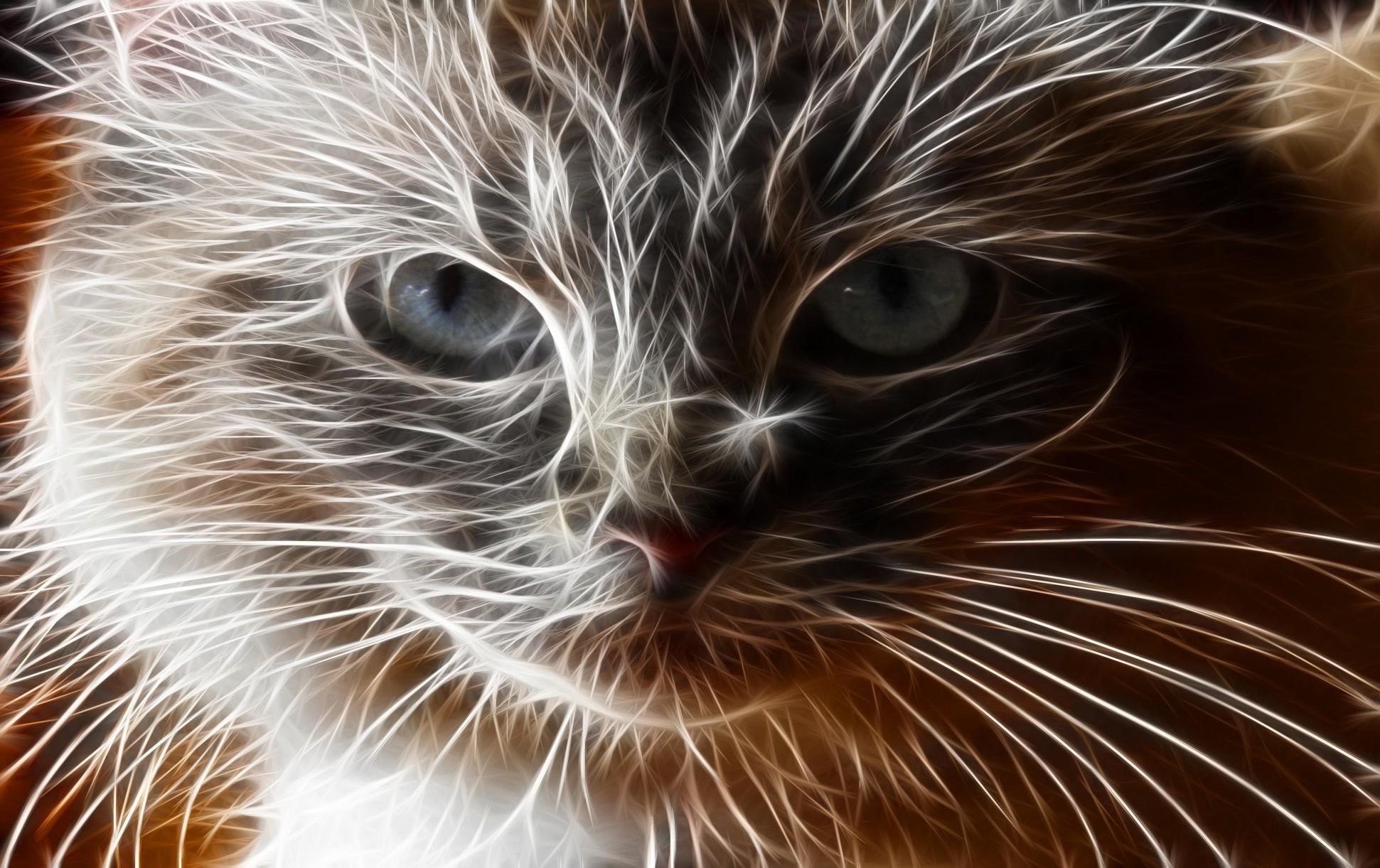 84 Gambar Binatang Tidak Bertulang Belakang Terbaik