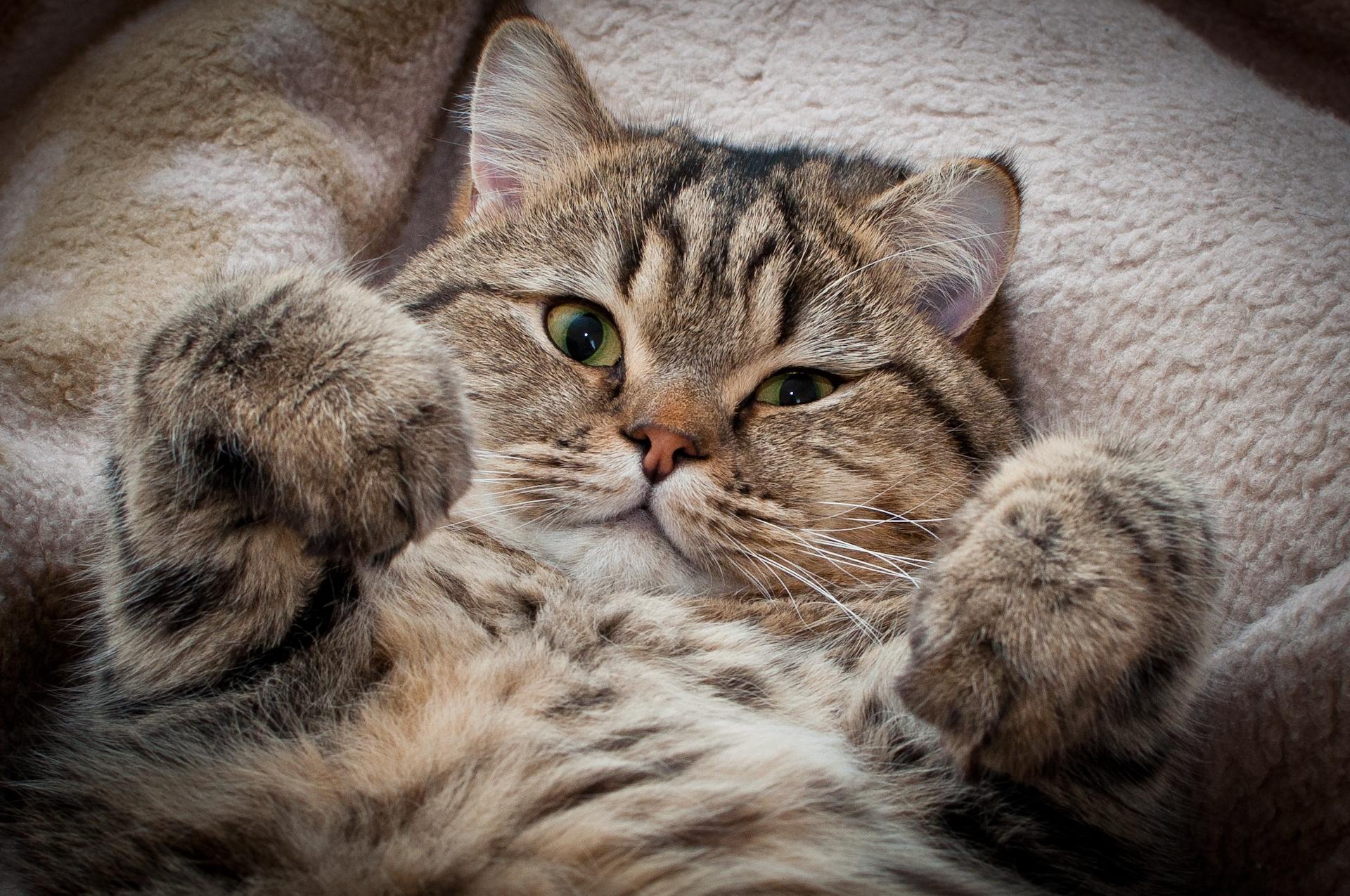 kočička tlusté fotky dospívající sex velké kohouty