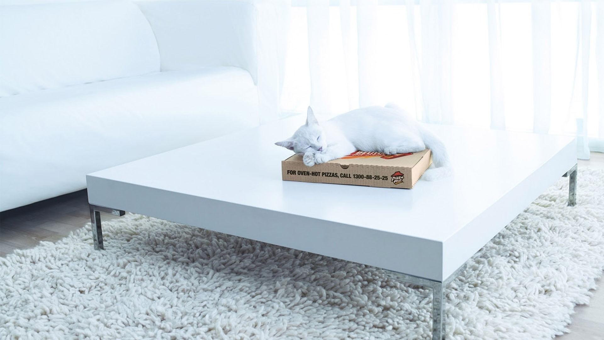 Fondos de pantalla : gato, habitación, sofá, Pizza, Cajas, Alfombras ...