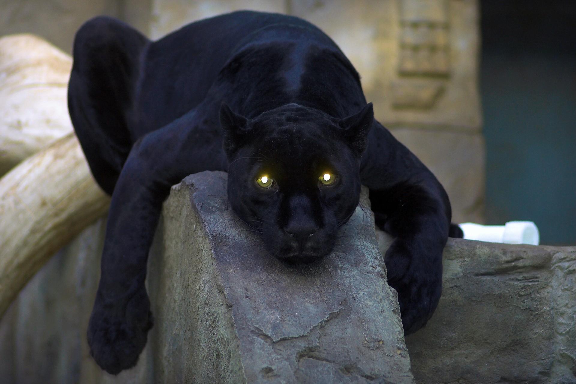 Sfondi scultura statua pantera nera arte fauna - Lettere stampabili di medie dimensioni ...