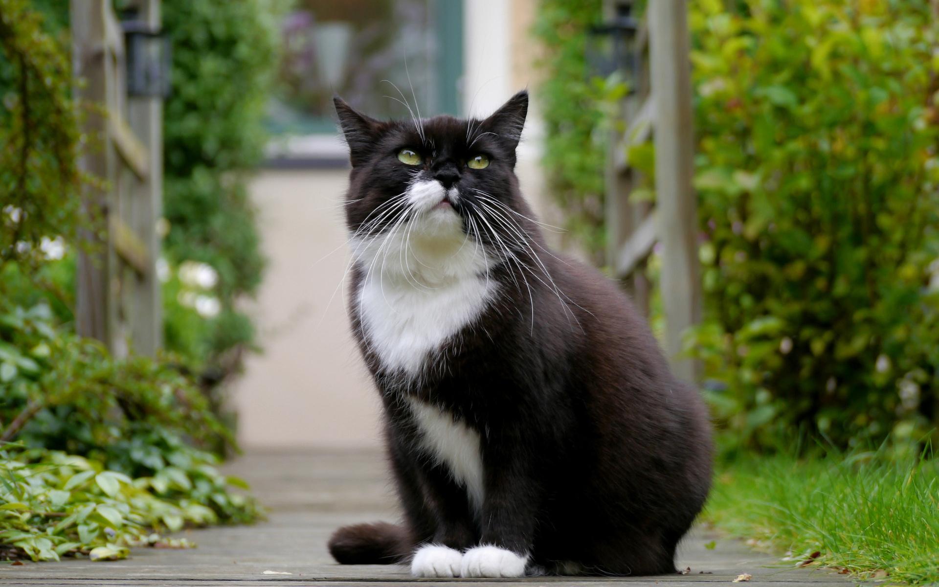 fotografie tlusté černé kočičky
