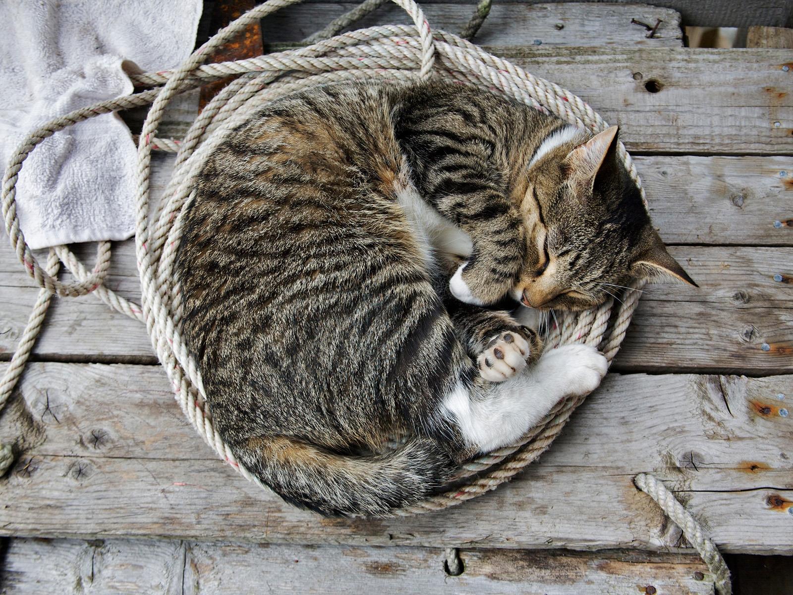 hintergrundbilder schlafen pelz whiskers l ge wilde katze unten k tzchen seil fauna. Black Bedroom Furniture Sets. Home Design Ideas