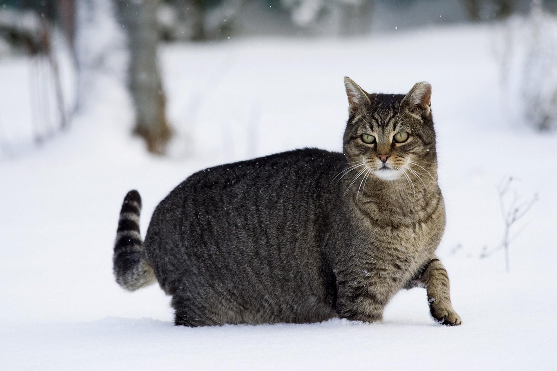 при открывании картинки кошек зимние необходимо тратить деньги