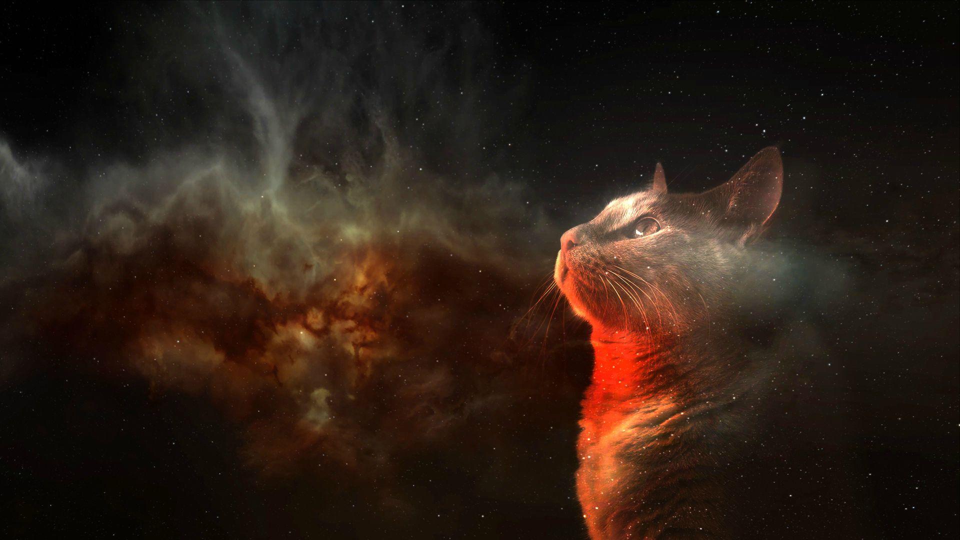 Cat Space Digital Art Animals