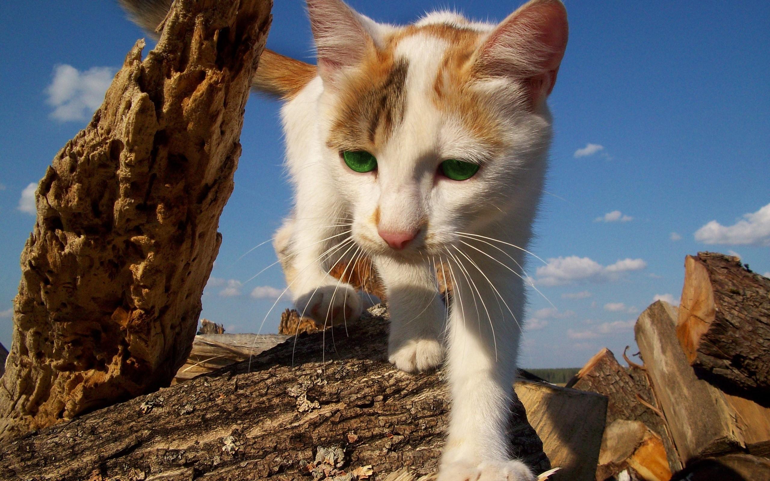 отличные картинки котов как ты