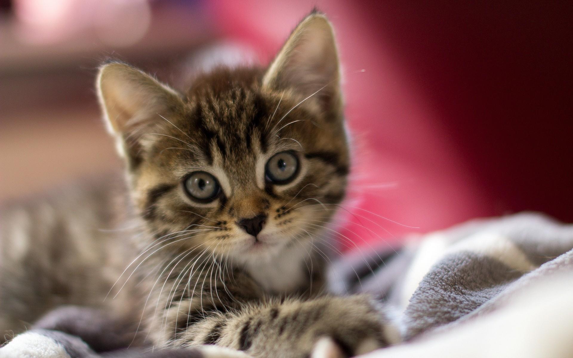 Котенок в картинках