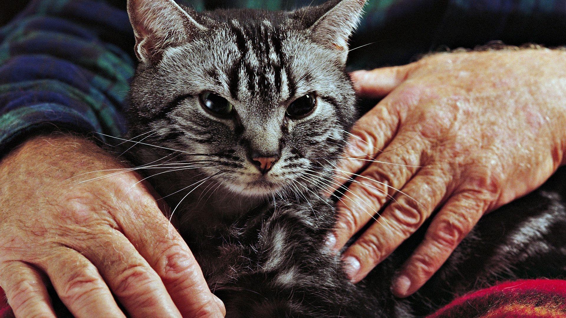 кот с руками картинки без косточки