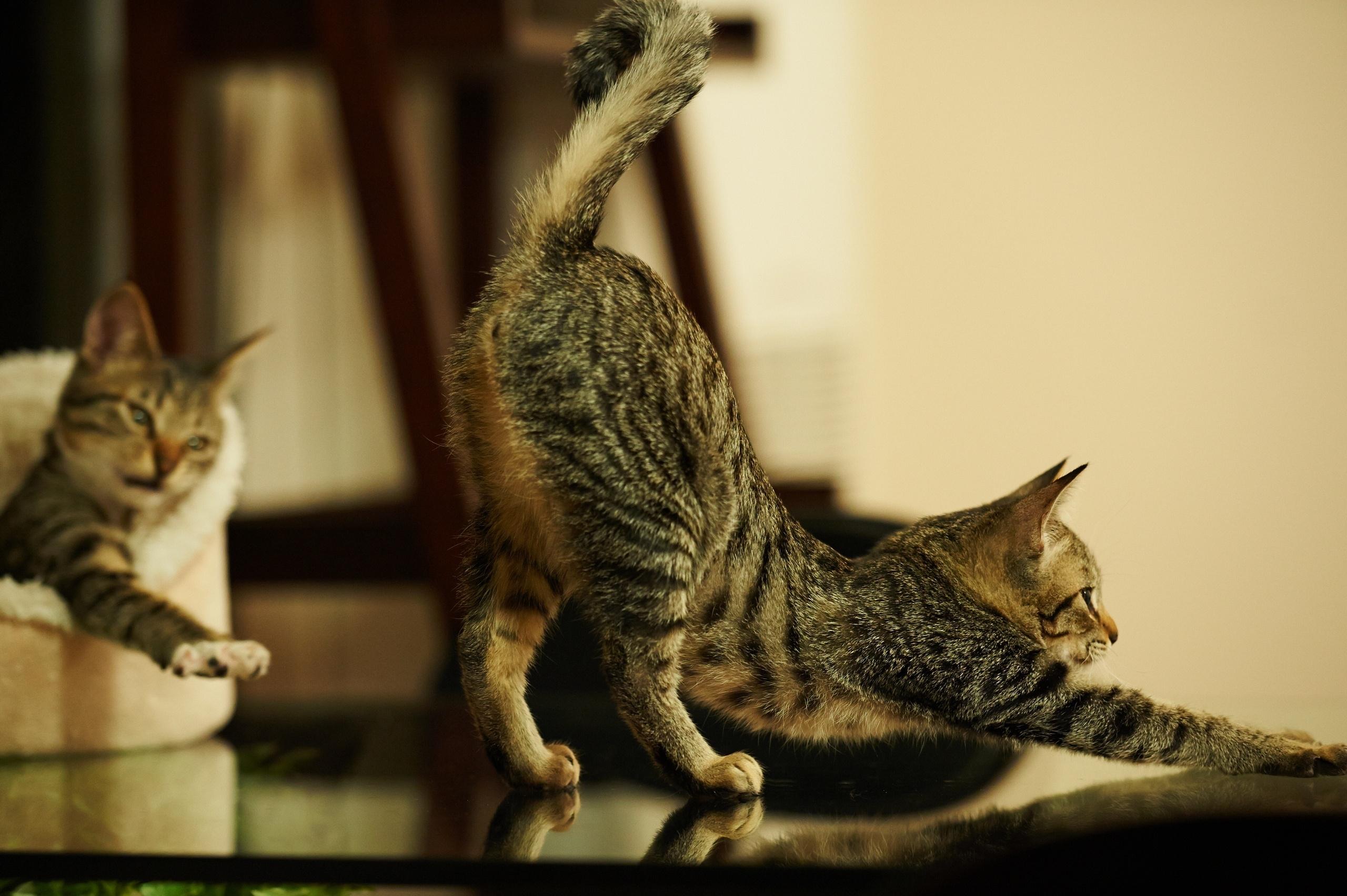 Картинка игривая кошка