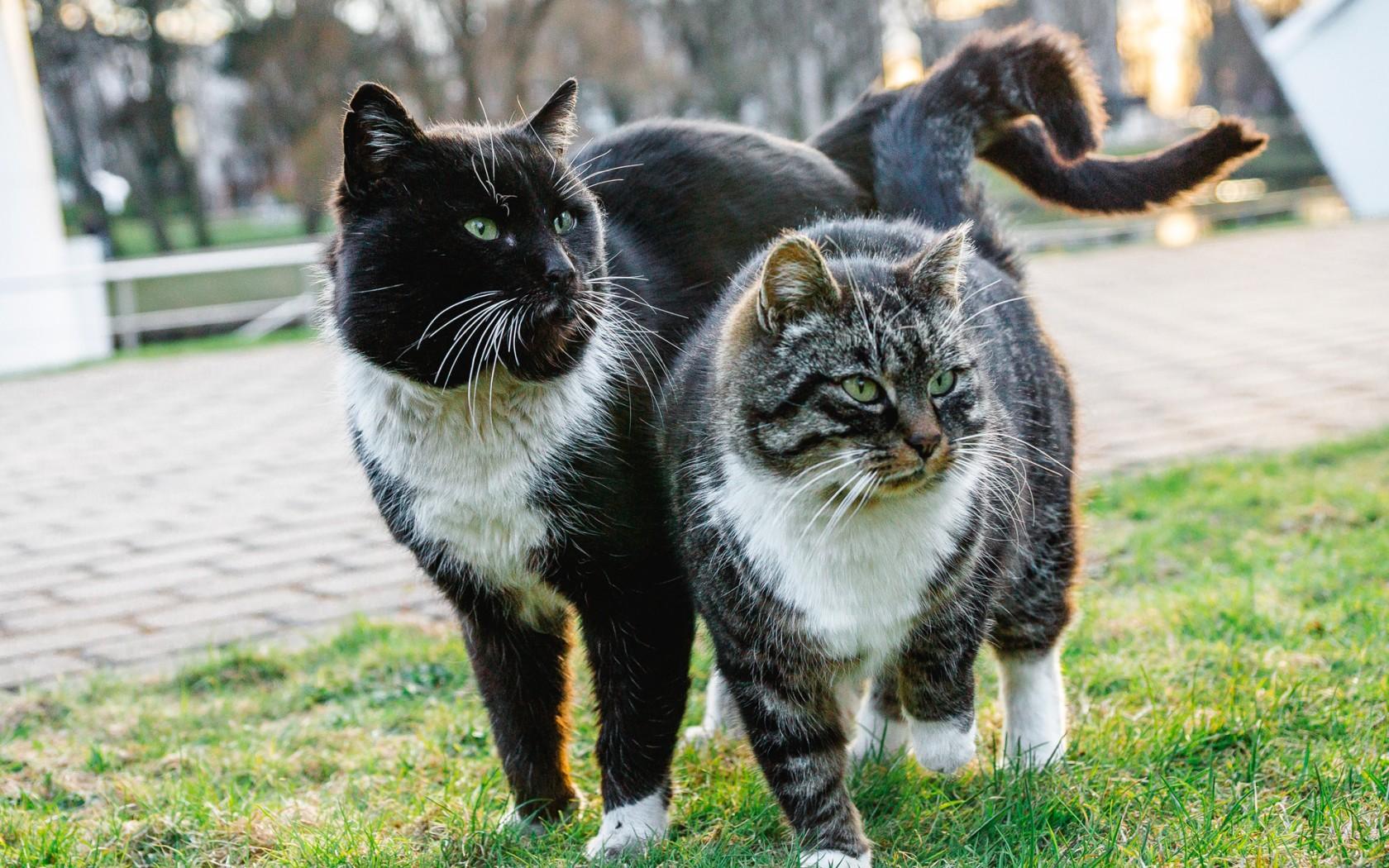 исполнении картинки кошек парами всемирной паутине