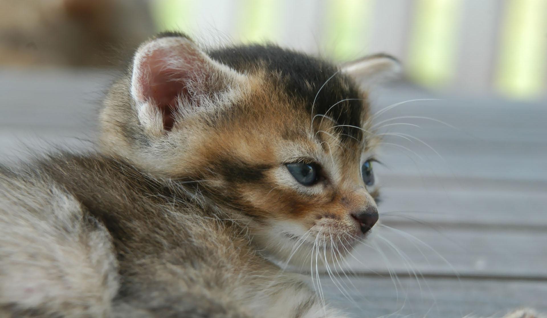 маленькие кошачьи картинки протяжении нескольких