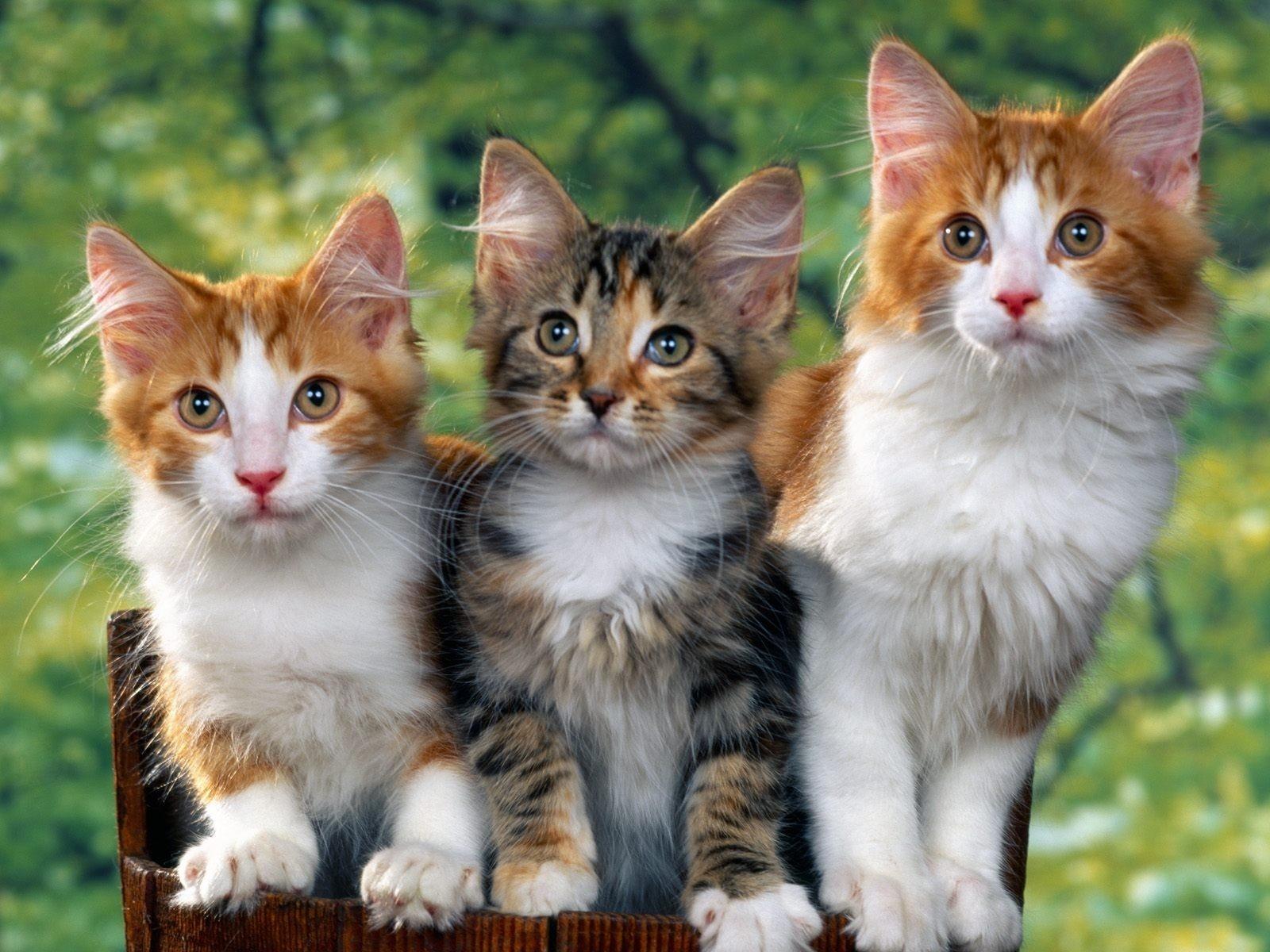 сделать фото кошек с картинками мужские