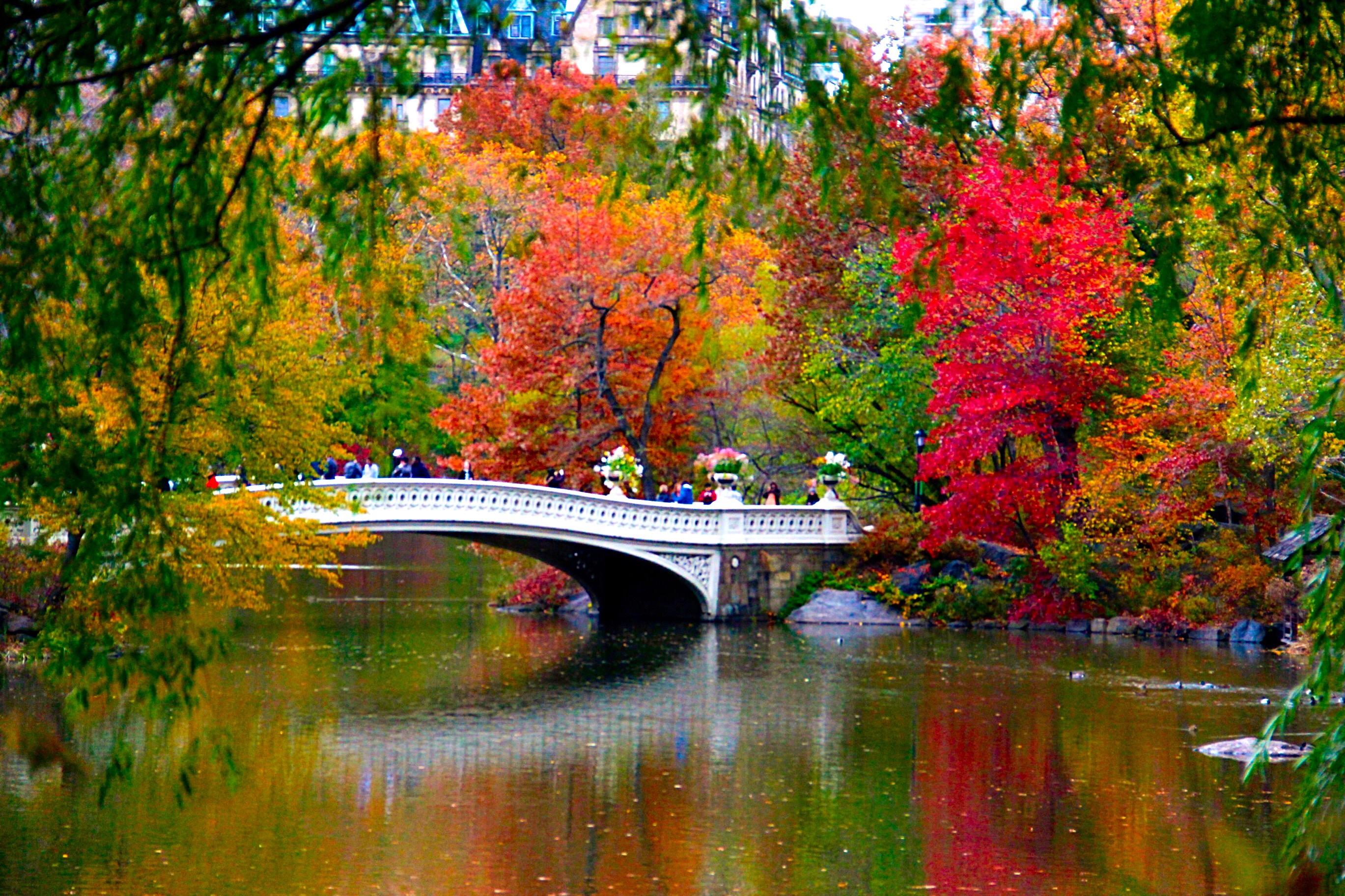 Wallpaper Centralpark Manhattan Newyork Autumn Fall Nature