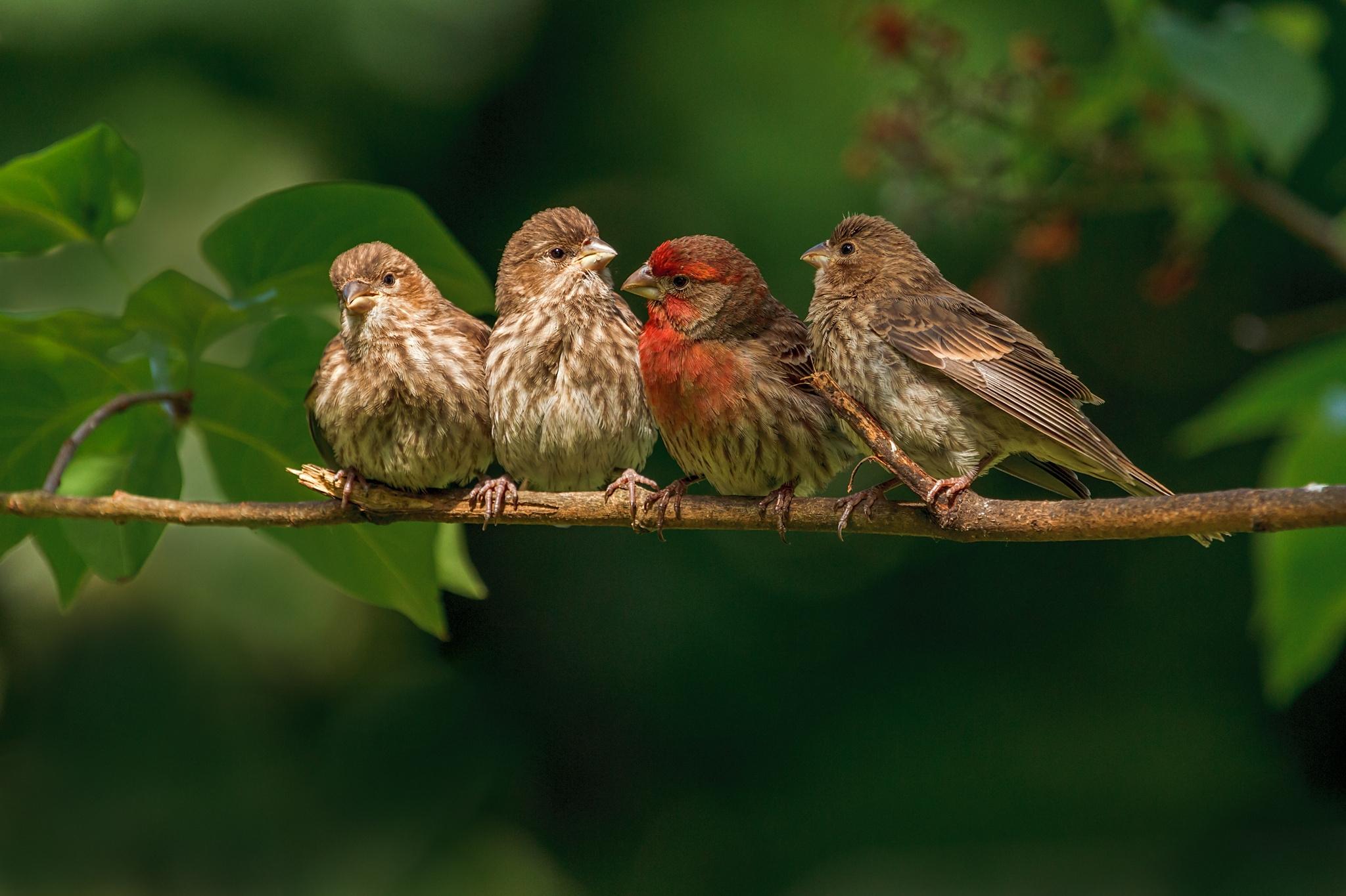 Картинки птиц фото