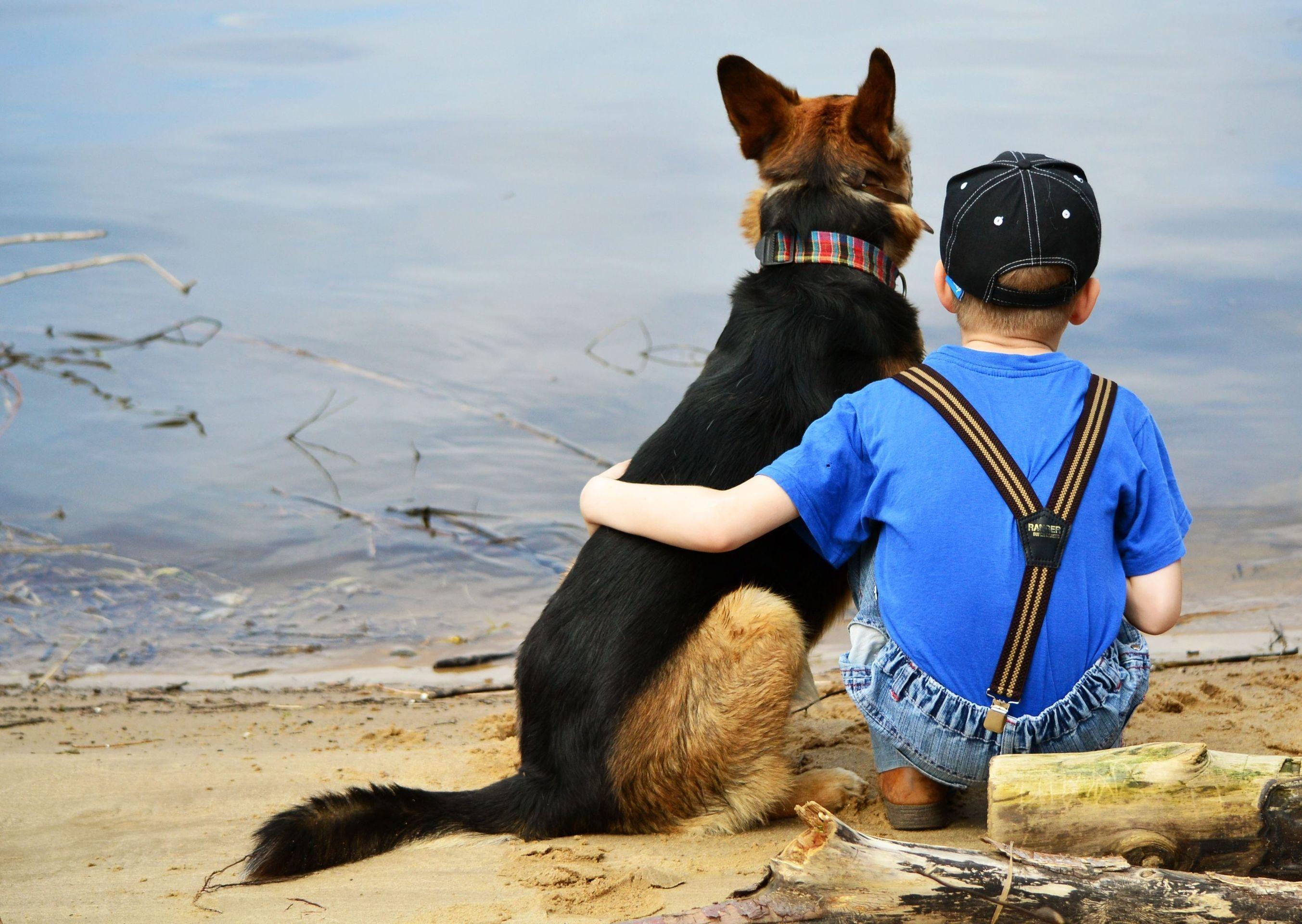 Поменять все картинки на собак