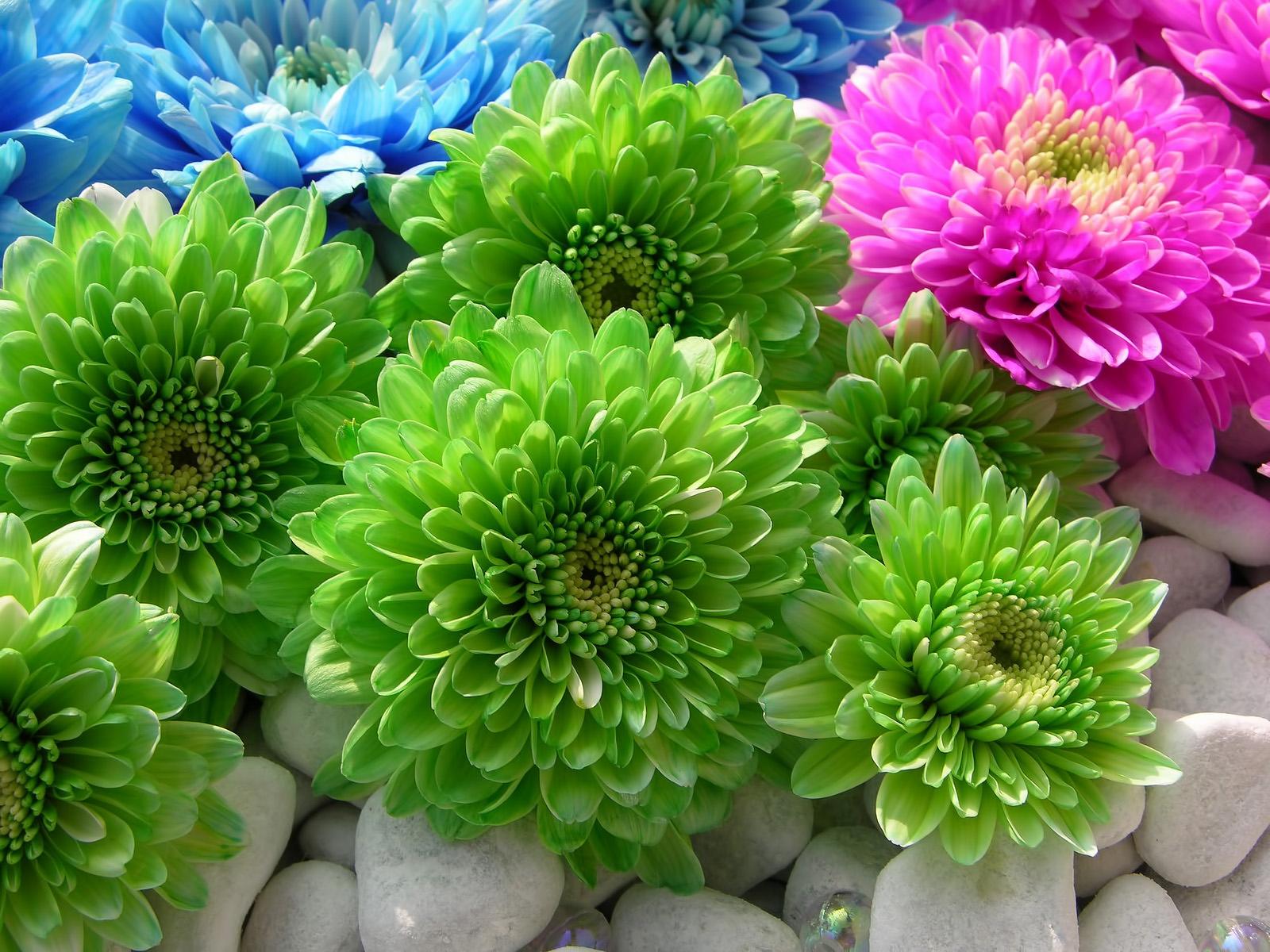 Зеленые цветы фото картинки