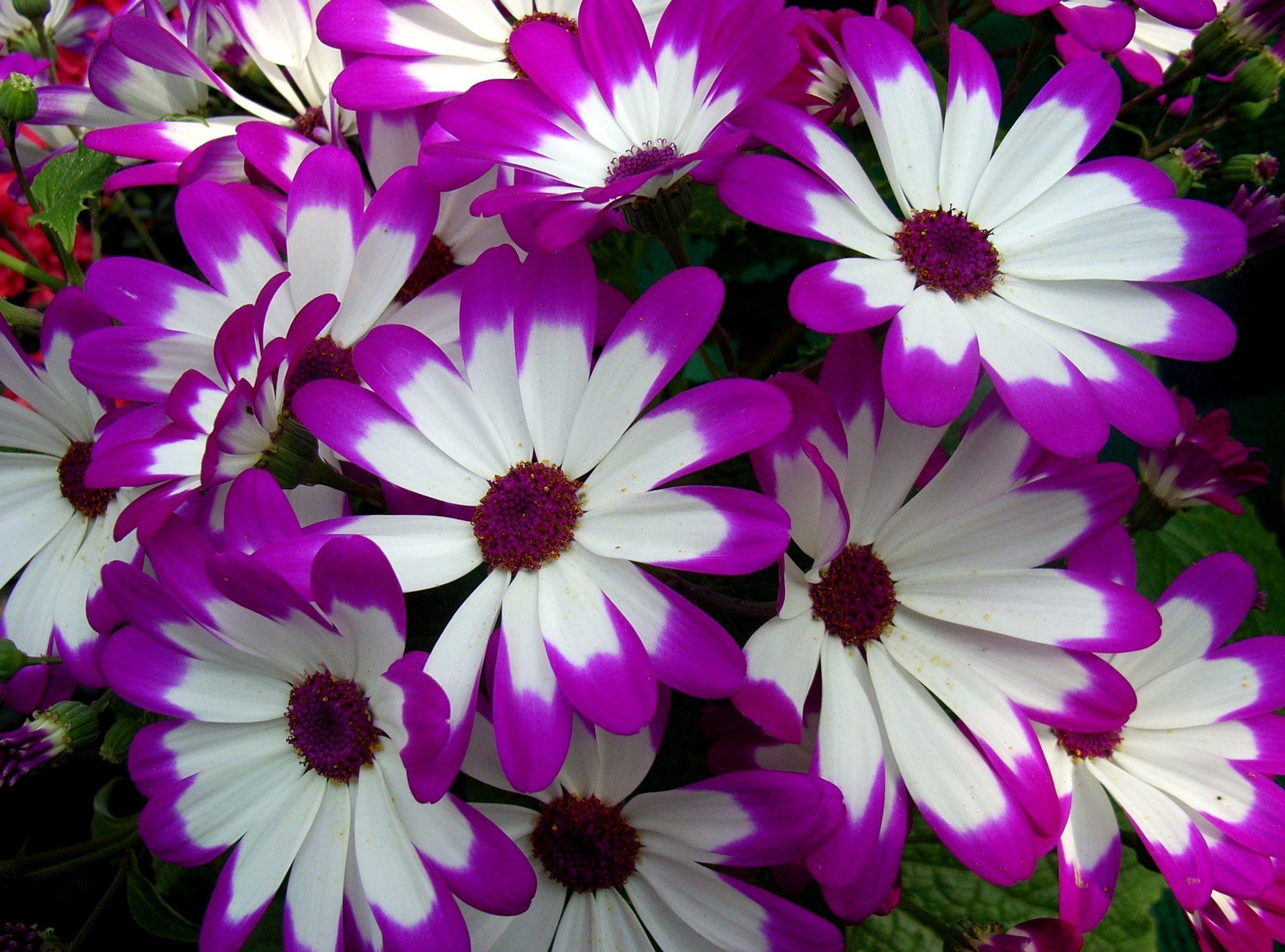 Фото цветов найдено в картинках